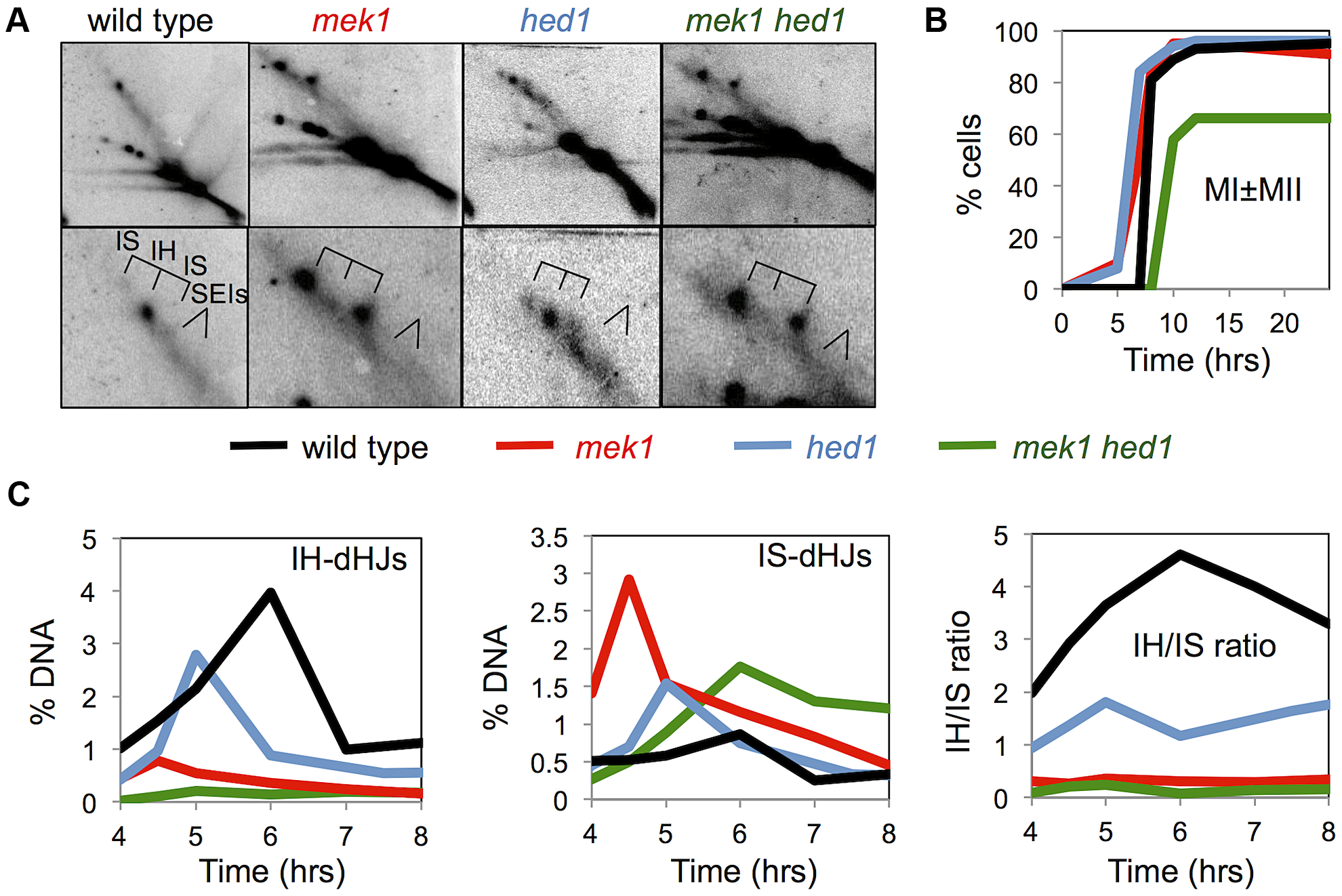 Mek1 and Hed1 make independent contributions to interhomolog template bias.
