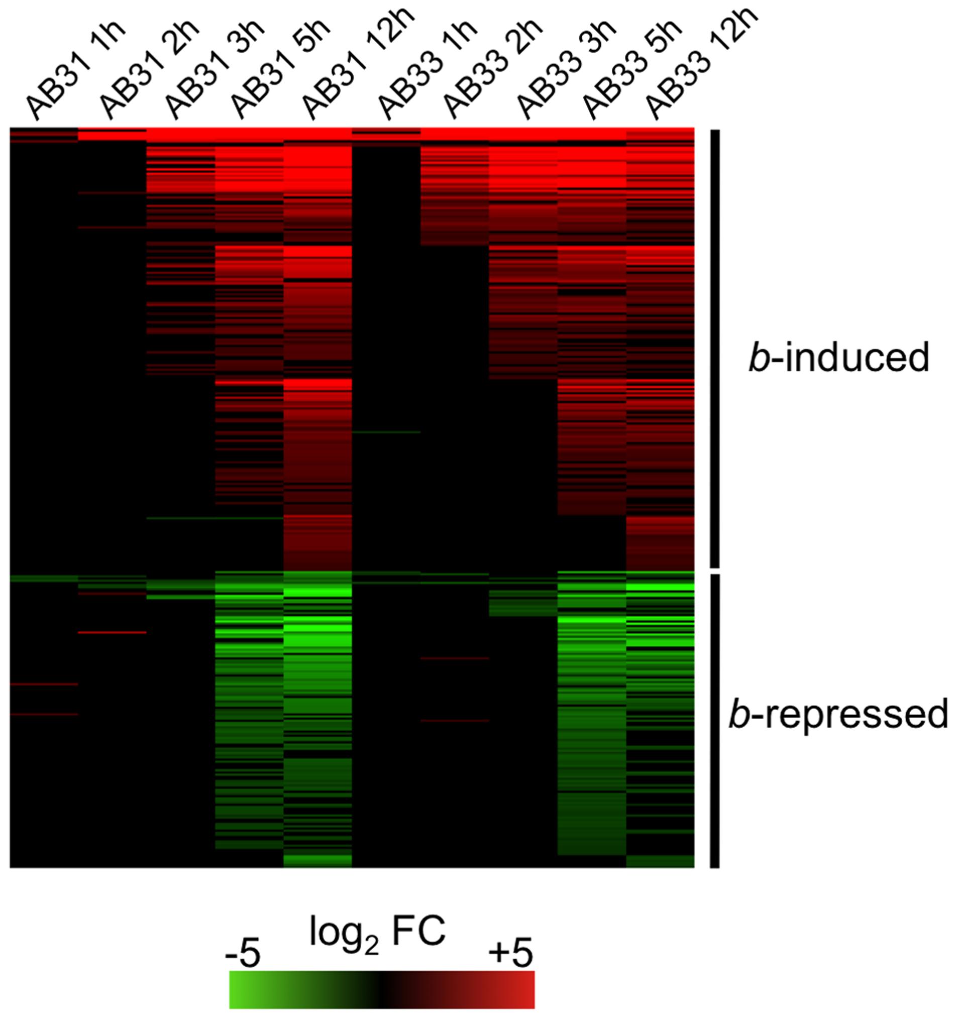 <i>b</i>-dependent gene expression.