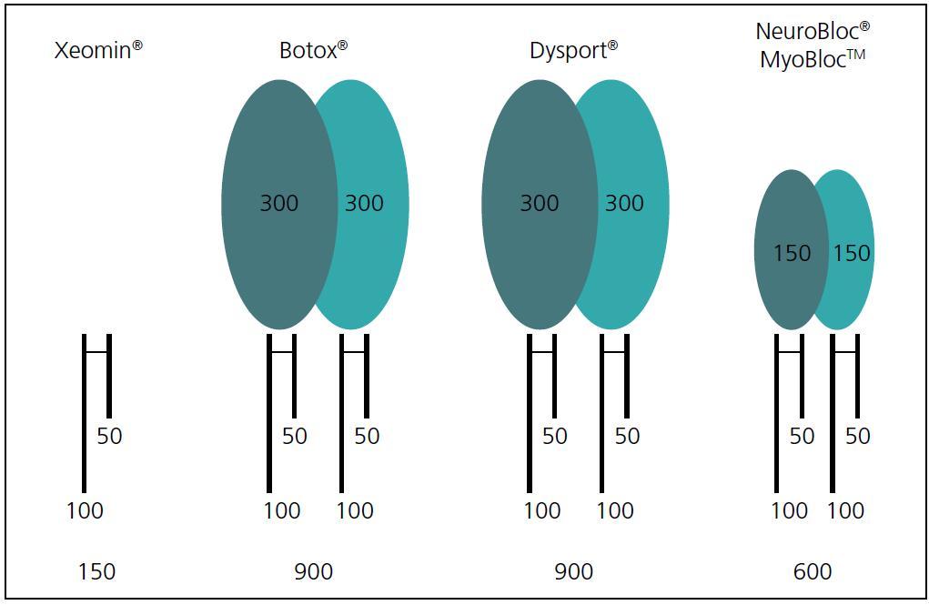 Vazba na bílkovinu u jednotlivých preparátů, a tím je dána velikost komplexu toxin a protein i průstup tkáněmi. Xeomin obsahuje pouze molekulu botulotoxinu (50 lehký a 100 kDa těžký řetězec).
