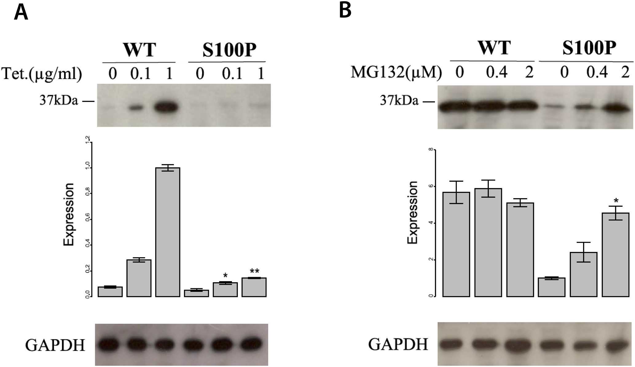 The mutation S100P reduces CA8 protein stability by means of proteasome-mediated CA8 degradation.