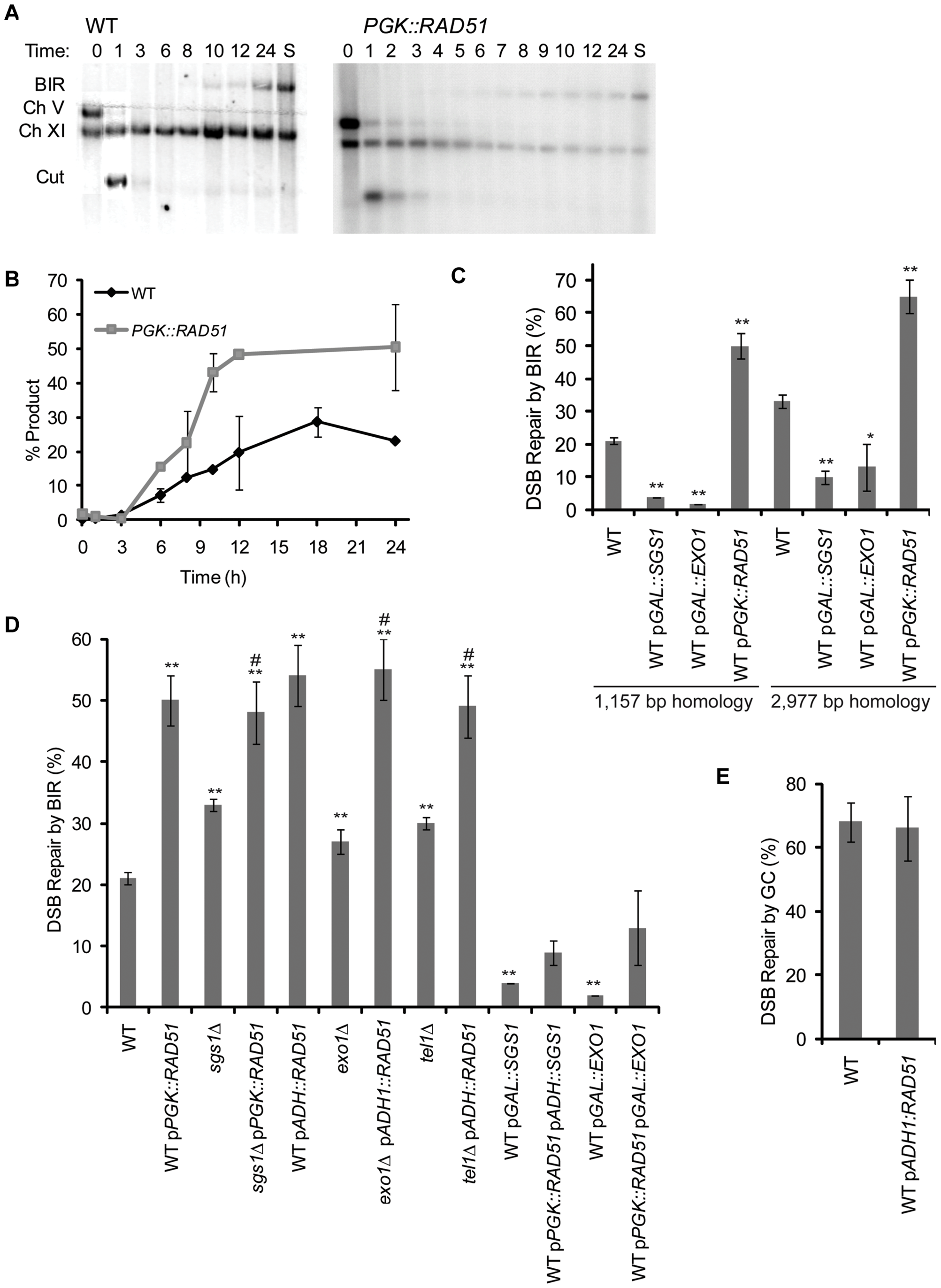 Overexpression of <i>RAD51</i> increases the kinetics and efficiency of BIR.