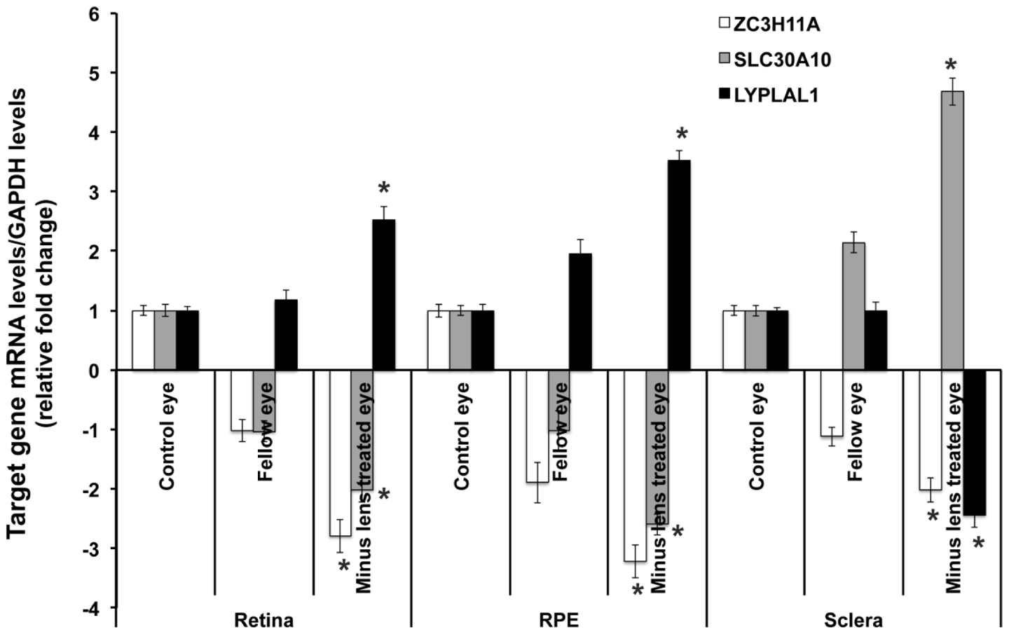 Transcription quantification of <i>ZC3H11A</i>, <i>SLC30A10</i>, and <i>LYPLAL1</i> in mouse retina, retinal pigment epithelium, and sclera in induced myopic eyes, fellow eyes, and independent control eyes.
