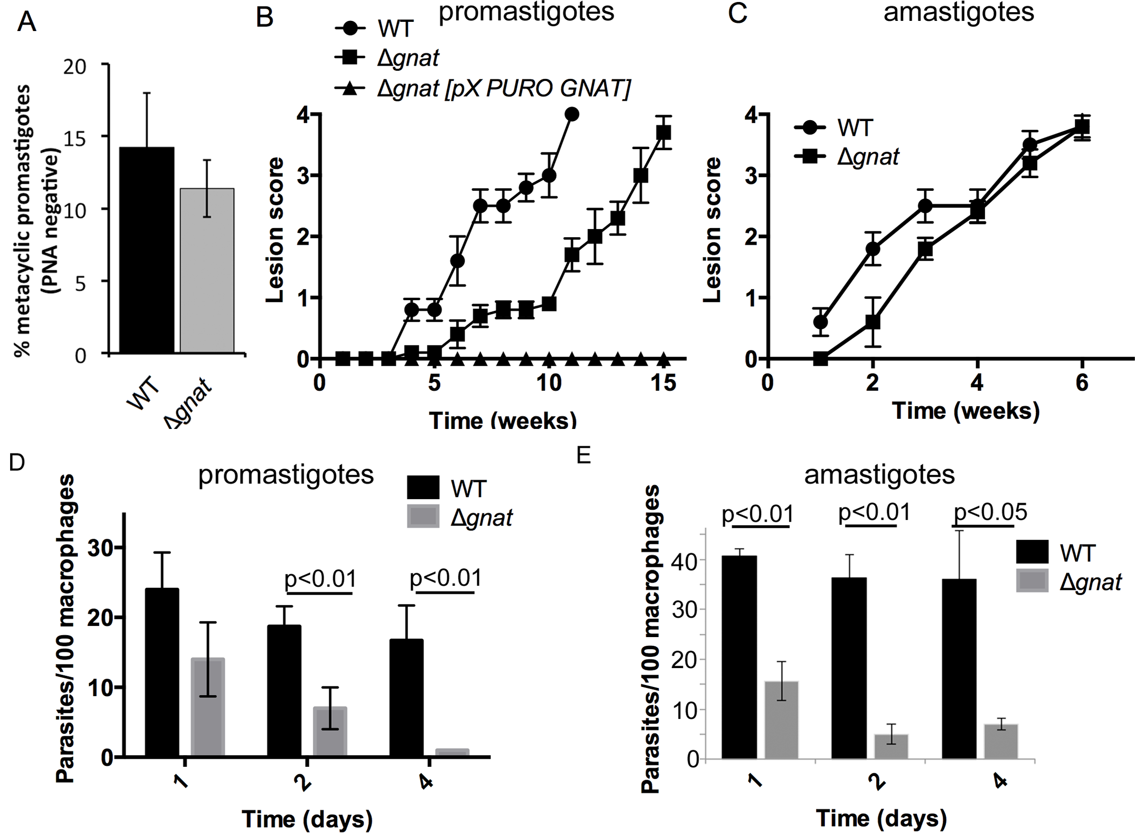 Infectivity of the ∆<i>gnat</i> mutant in BALB/c mice and macrophages.