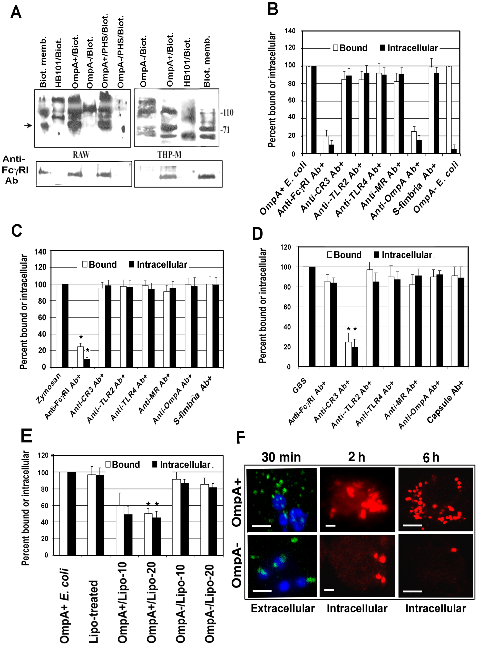 OmpA interaction with FcγRIa is necessary for binding to, and entry of, <i>E. coli</i> K1 in RAW 264.7 cells.