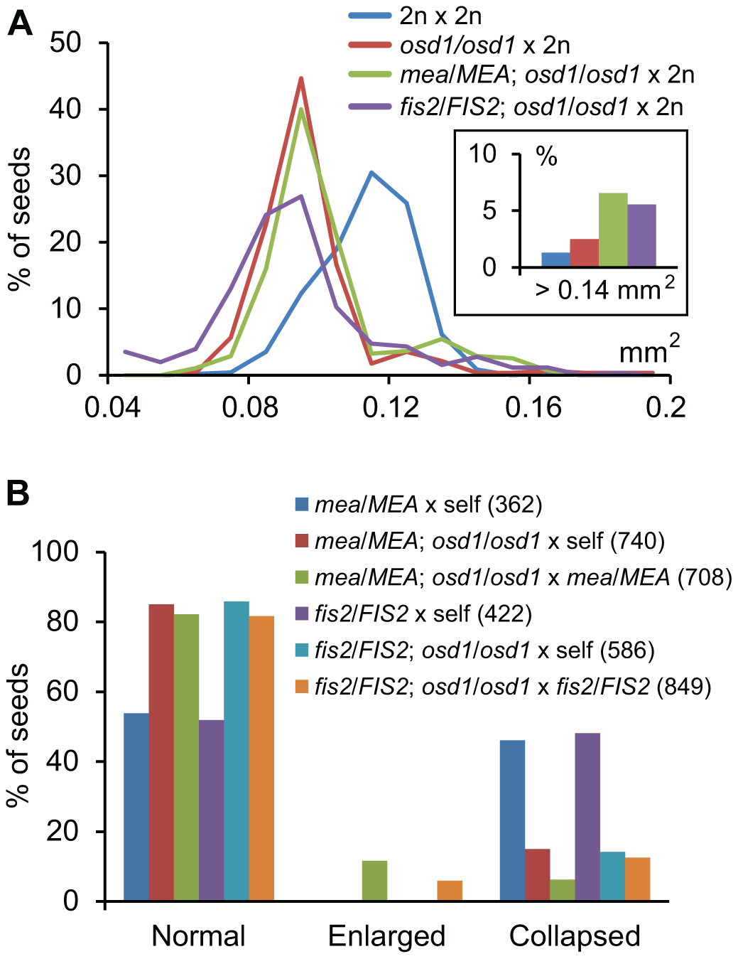 Maternal Excess Triploid <i>mea</i> and <i>fis2</i> Seeds Are Strongly Enlarged.