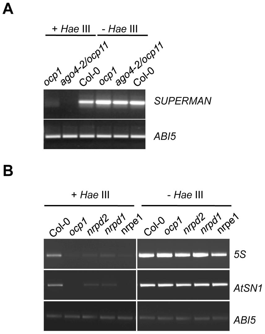 <i>ocp1</i> plants show hypomethylation in RdDM target DNA sequences.