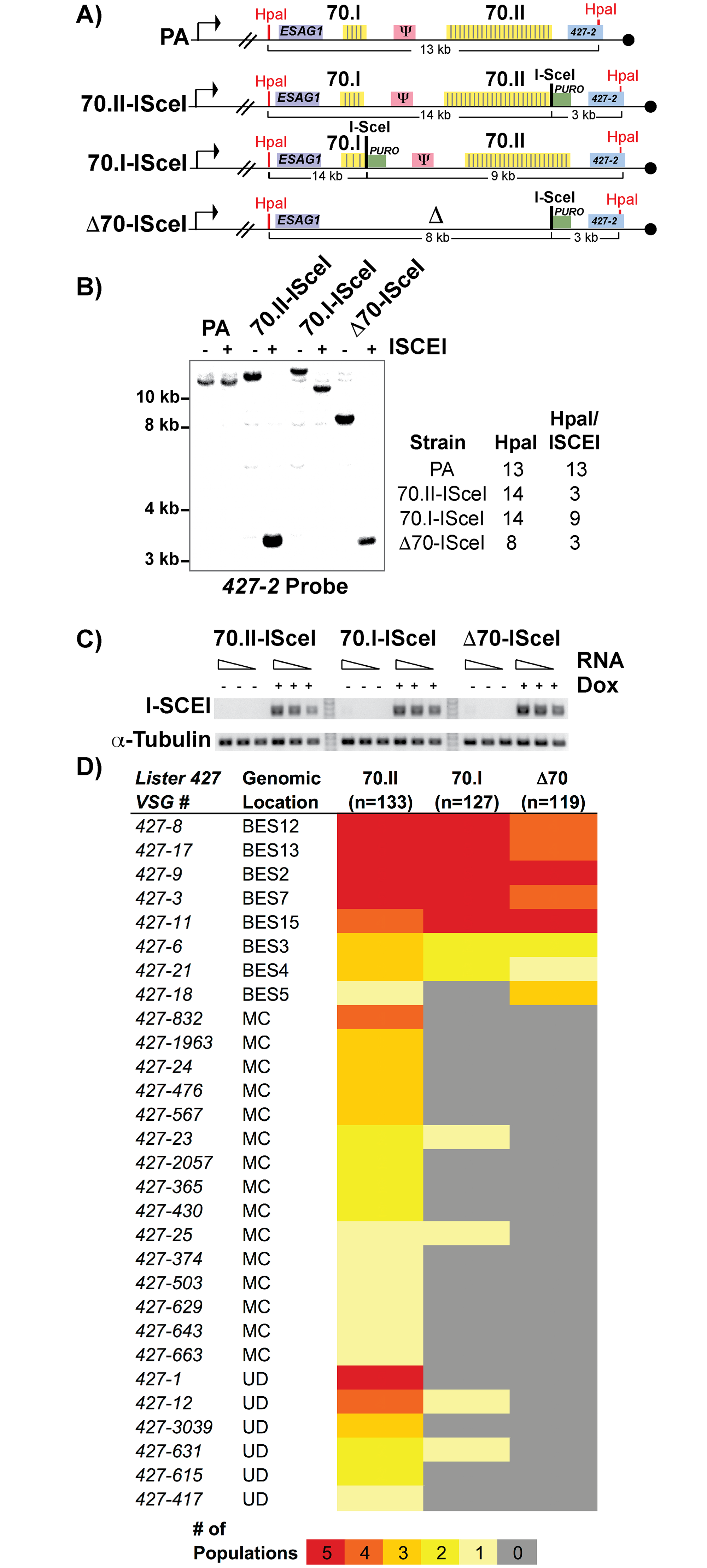 Effects of 70-bp repeats on <i>VSG</i> donor selection and switching.