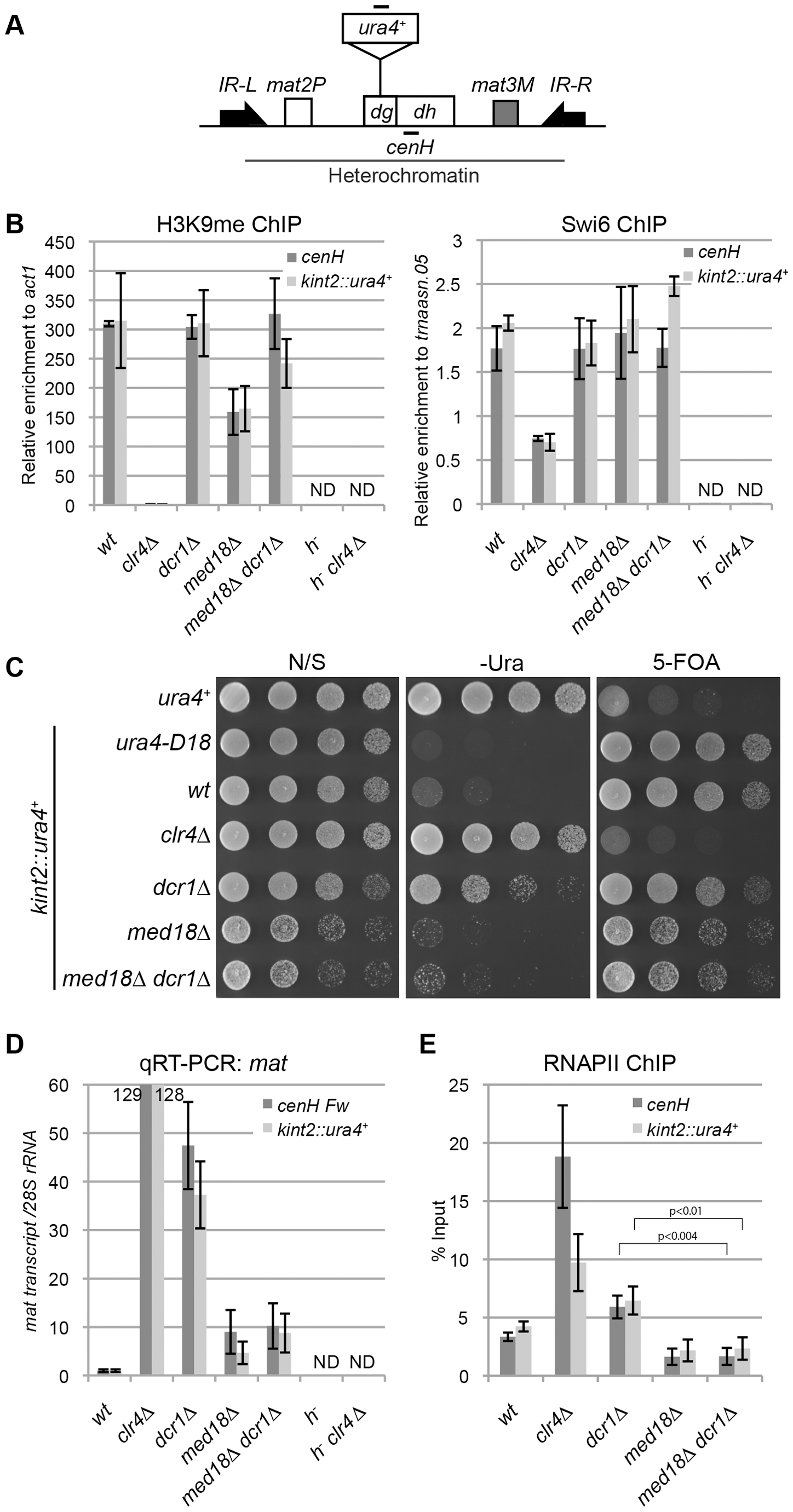 Mediator is required for transcriptional activation in heterochromatin.