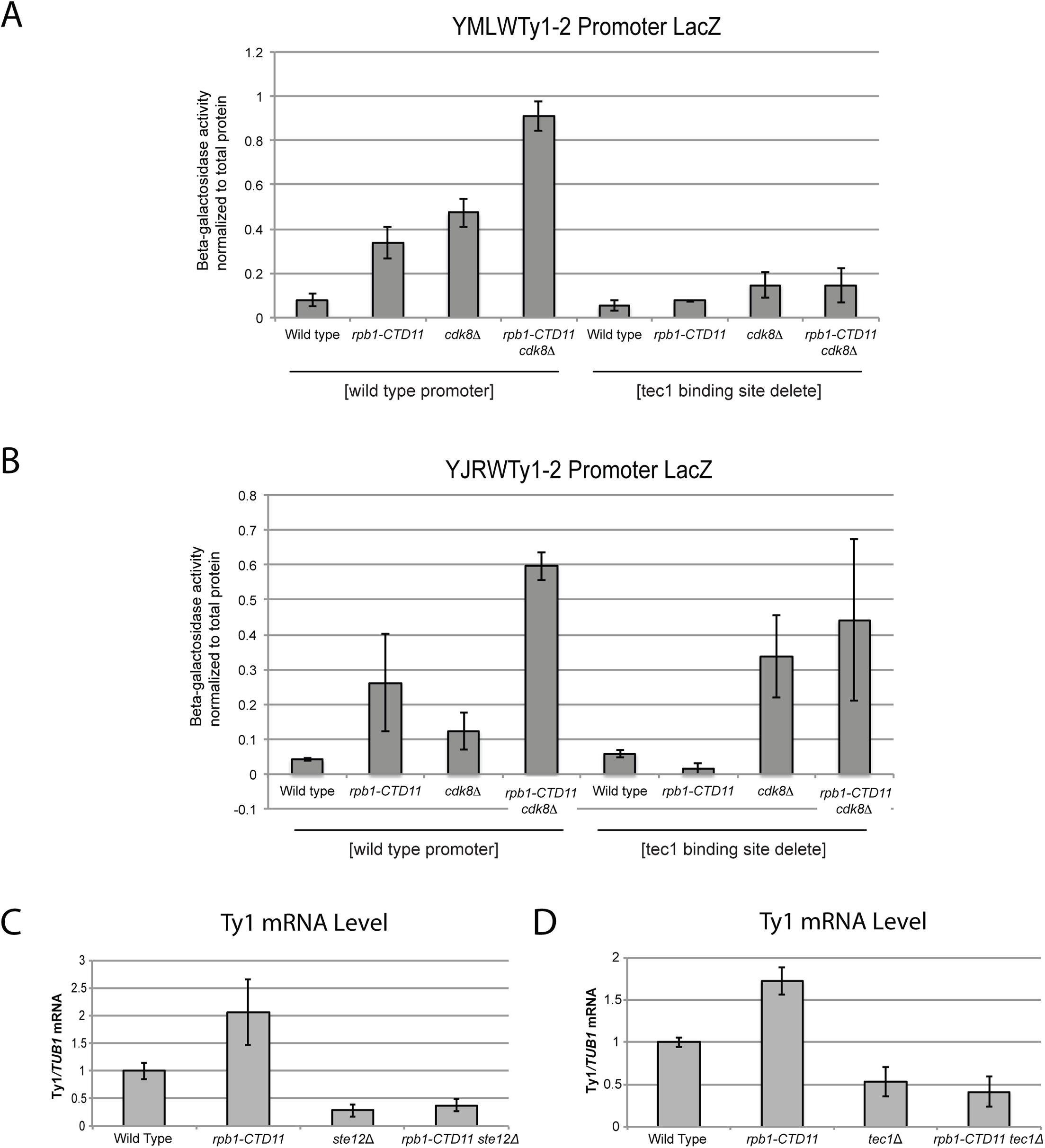 The increased Ty1 gene expression levels observed in the <i>rpb1-CTD11</i> mutant were dependent on <i>TEC1</i> or <i>STE12</i>.