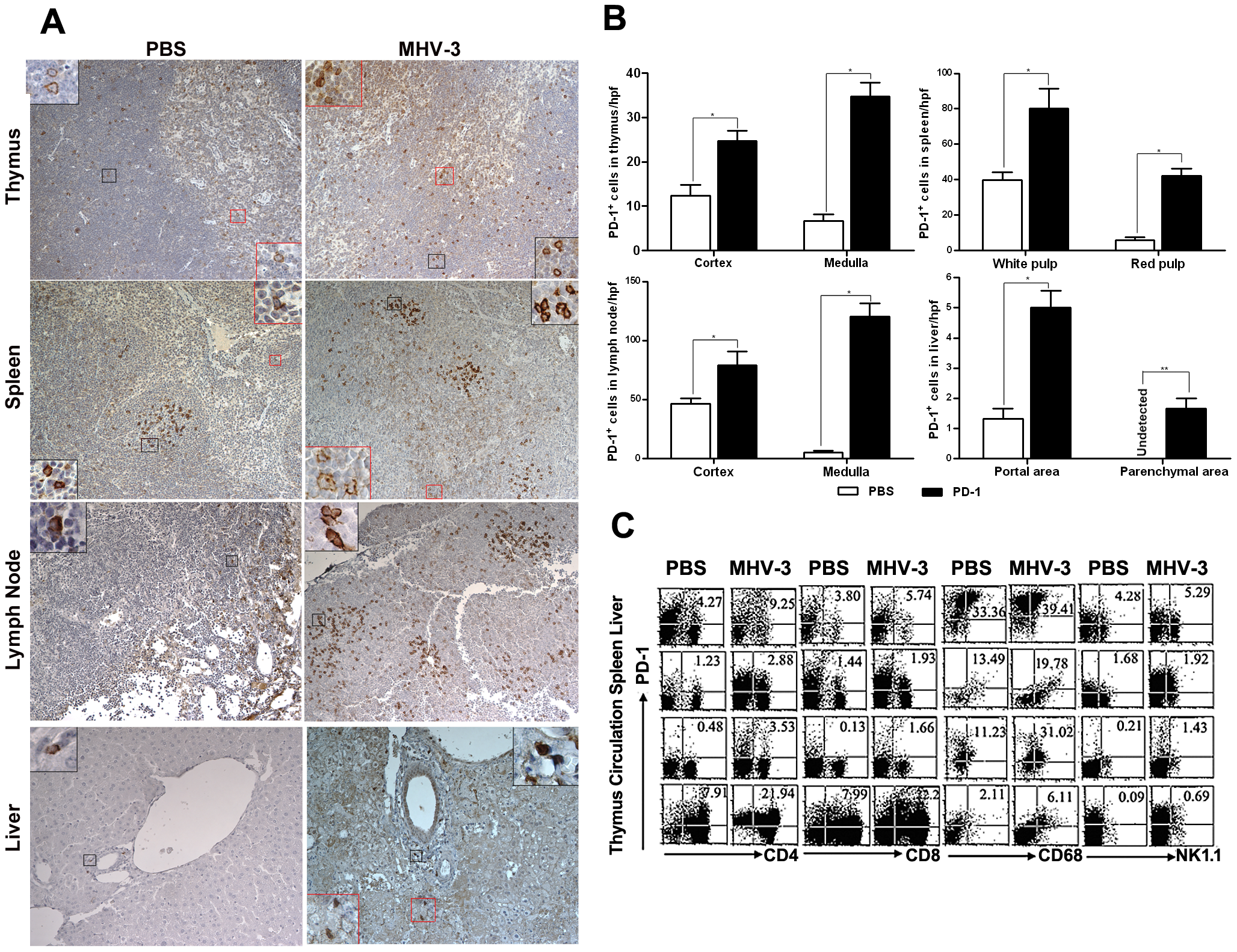 Enhanced expression of PD-1 on immune cells after 72 h of MHV-3 infection.