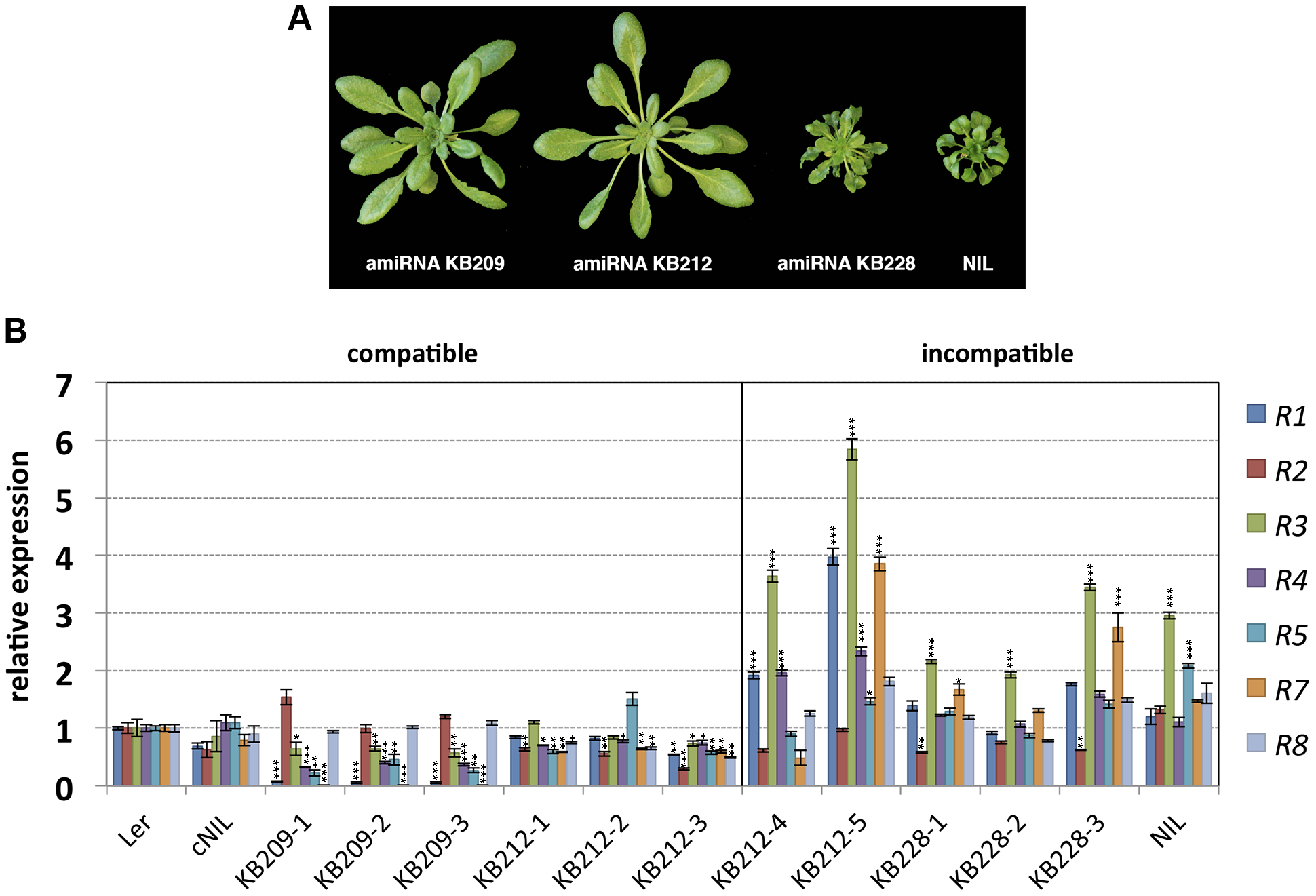 Growth phenotype of amiRNA lines at 14–16°C and <i>RPP1</i>-like gene expression.