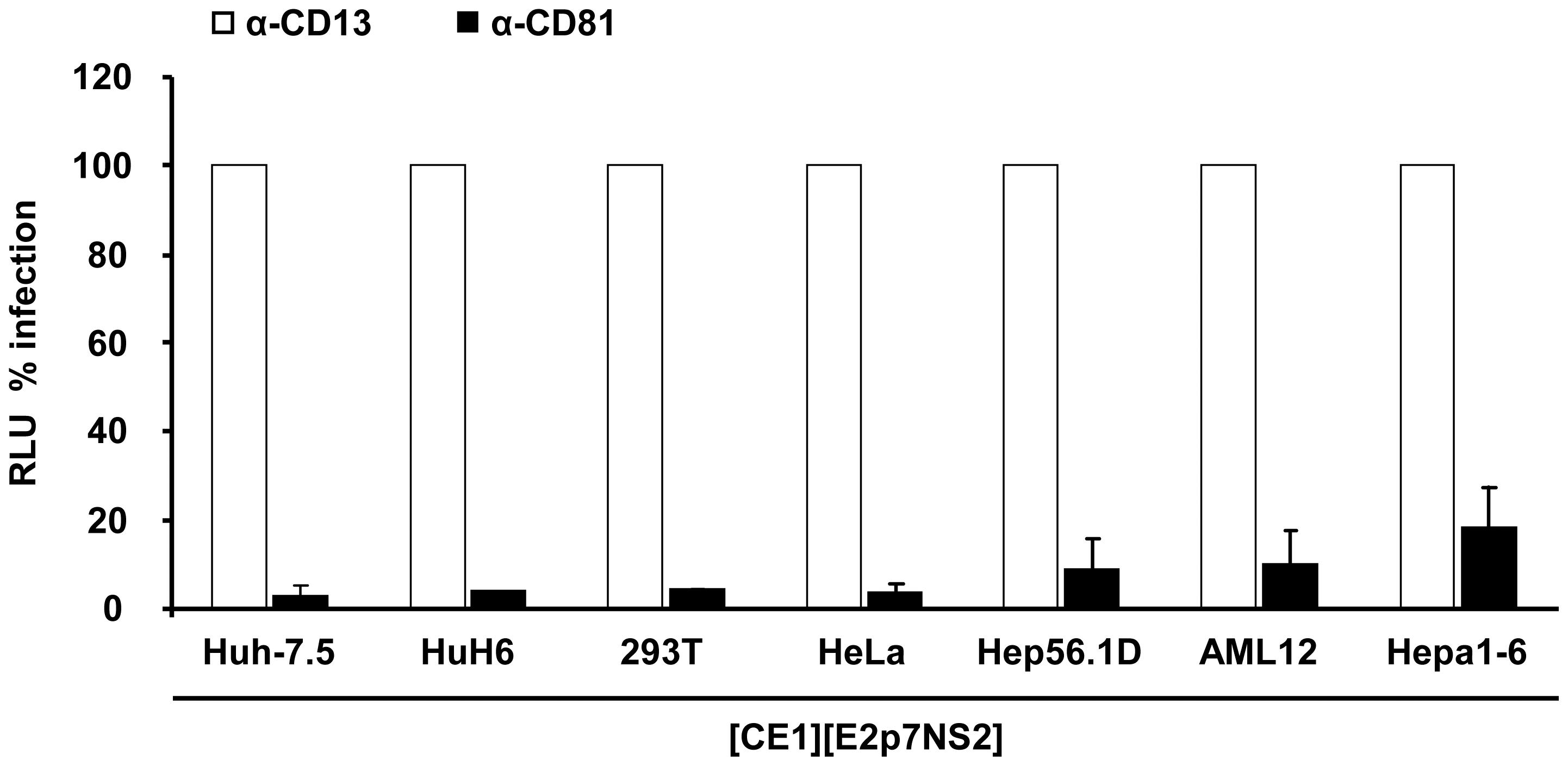 Neutralization of virus particles released from heterokaryons by CD81- specific antibodies.