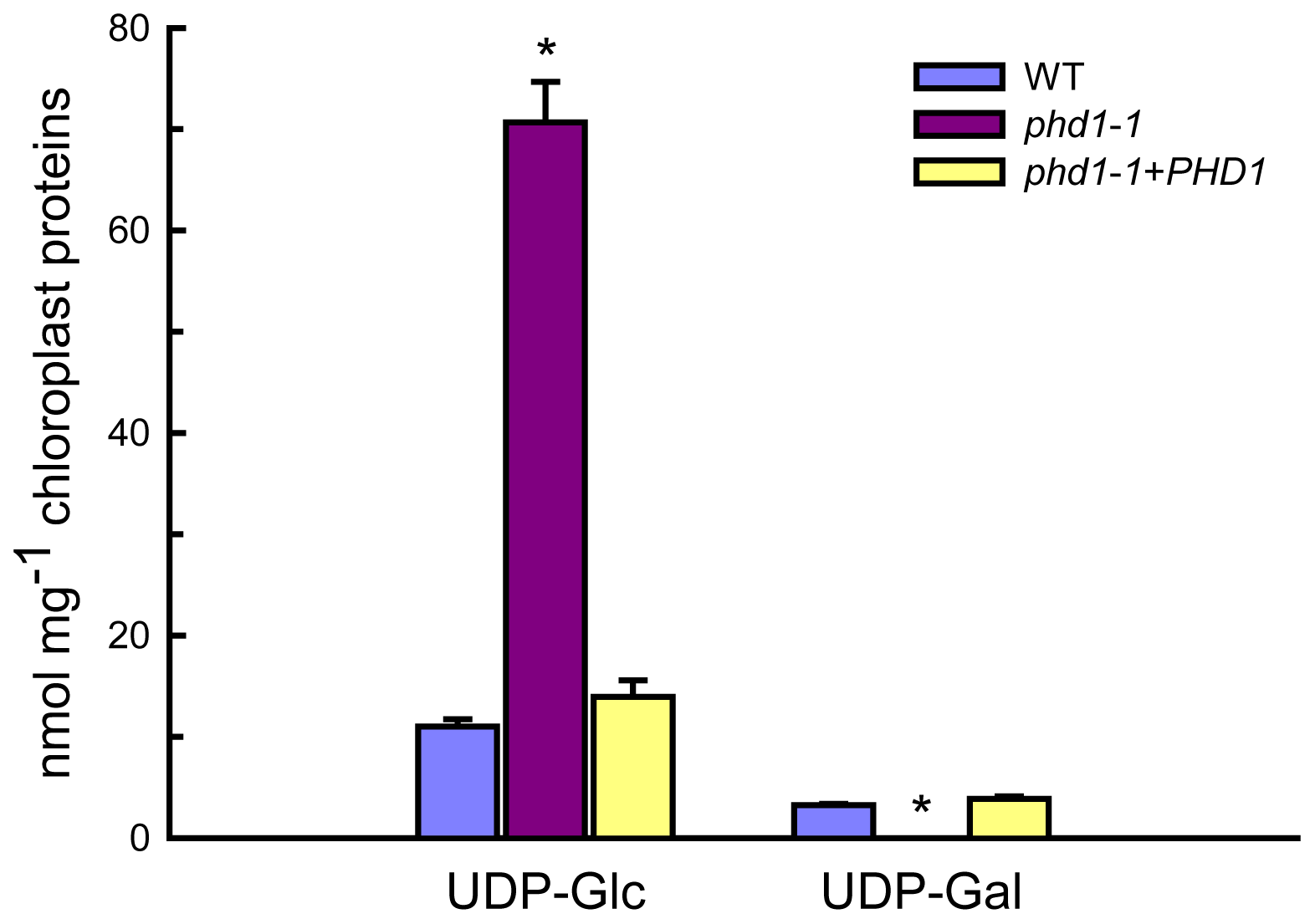 UDP-Glc and UDP-Gal levels in isolated chloroplasts from wild type, <i>phd1</i>-<i>1</i>, and <i>PHD1</i>-complemented transgenic lines.