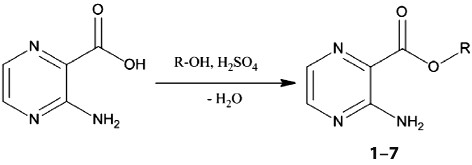 Fig. 2. General synthesis and structure of 3-aminopyrazine-2-carboxylates 1–7