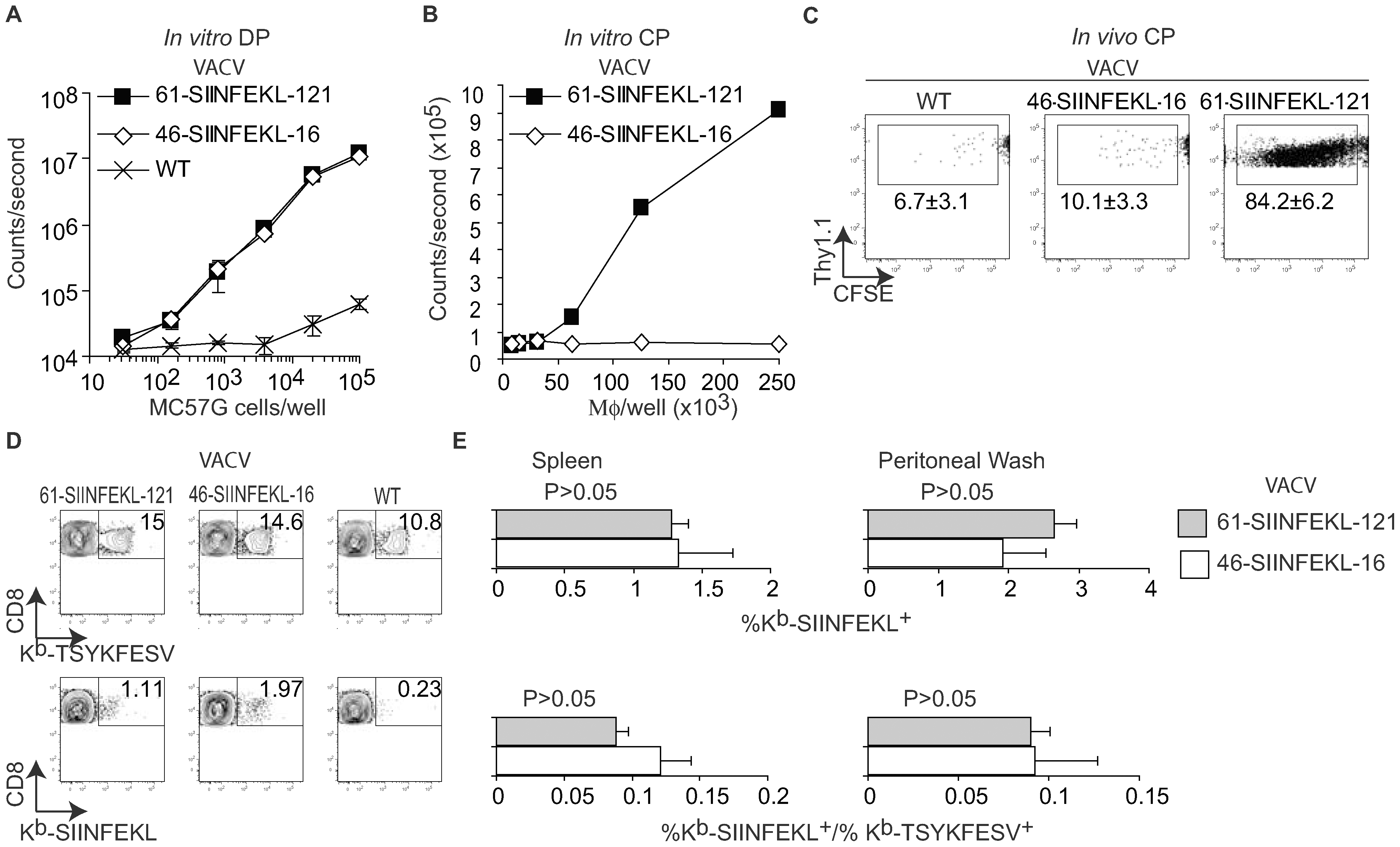 CP is not essential for efficient anti-VACV T<sub>CD8+</sub> responses.