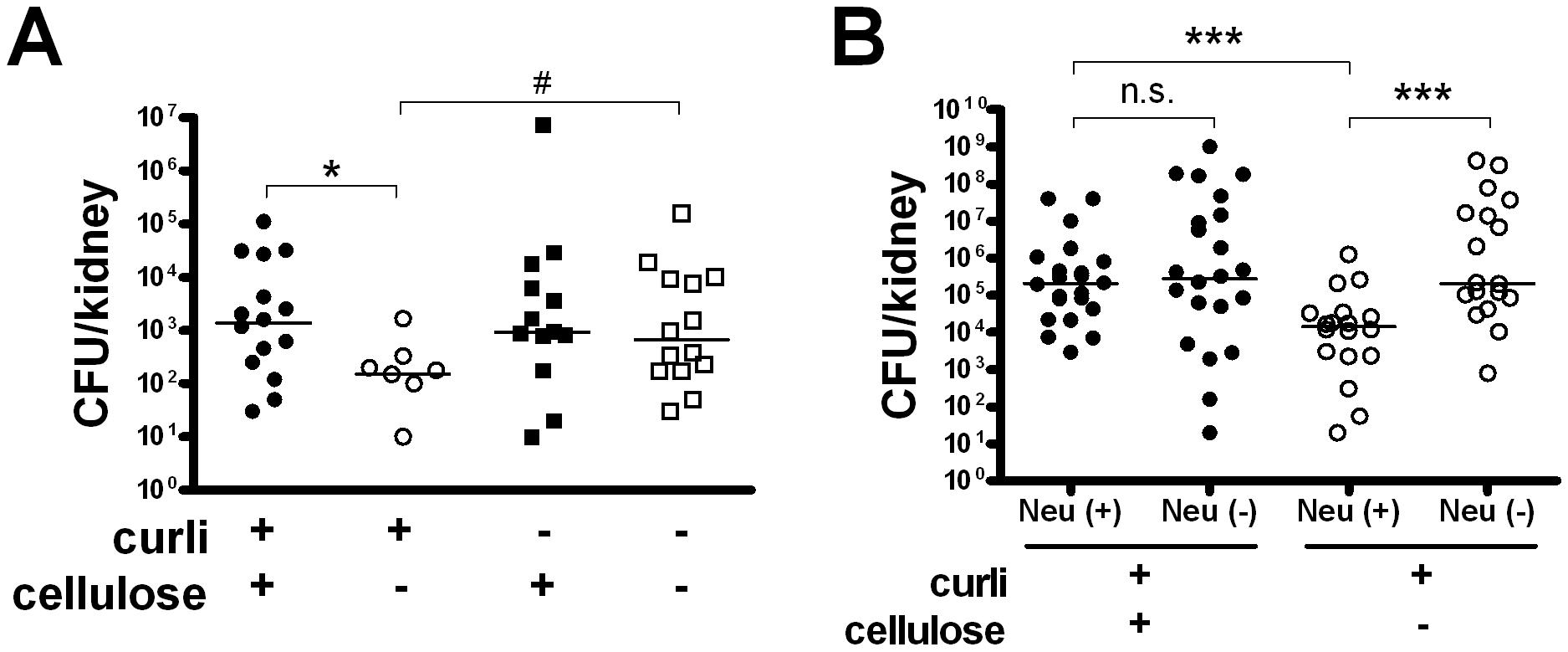 Cellulose delays bacterial elimination in vivo.