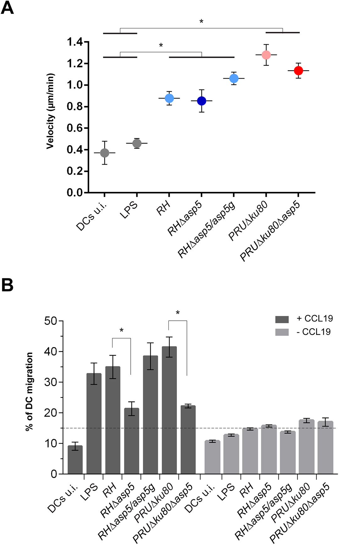 ASP5 affects dendritic cell (DCs) transmigration but not hypermotility.