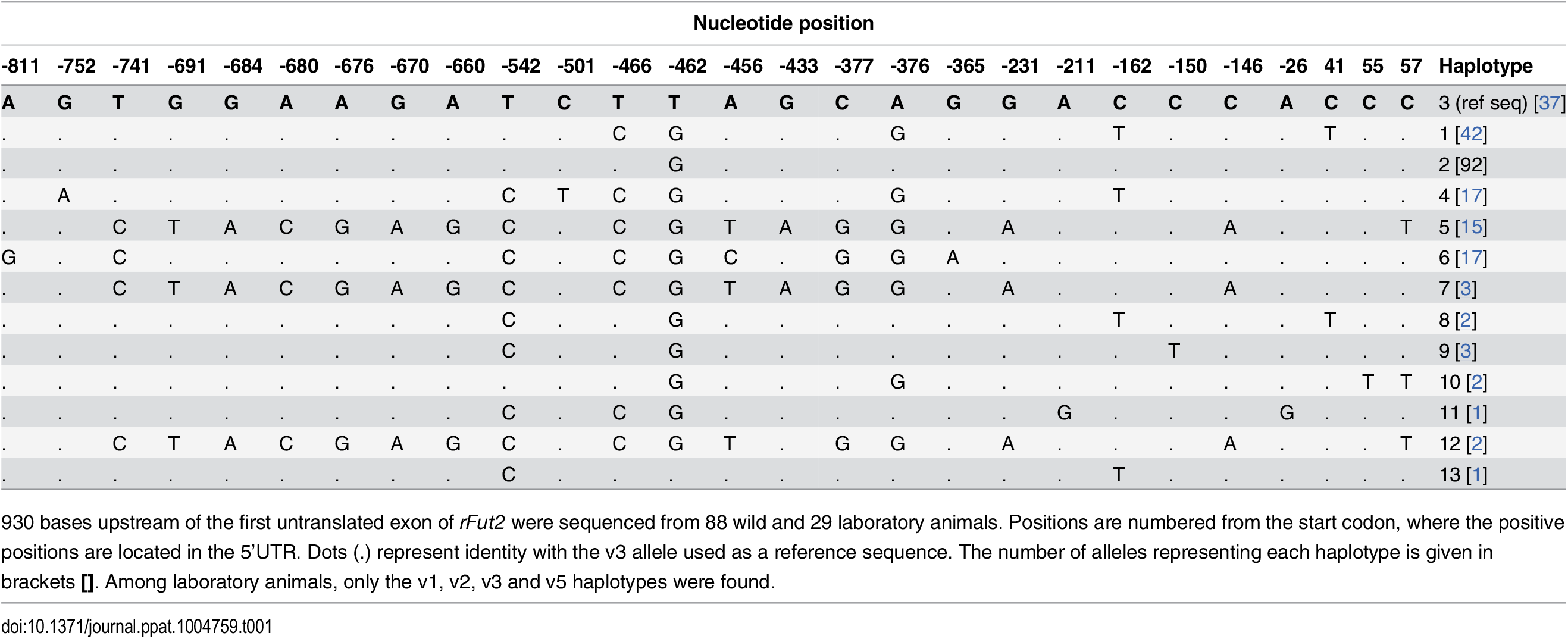 Nucleotide variation found in French wild and laboratory animals in the putative promoter region of rFut2 and inferred haplotypes.