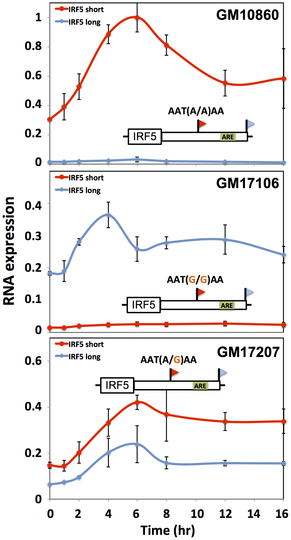 Genetic variation in IRF5 alternative polyadenylation and recovery of steady-state expression after induction.