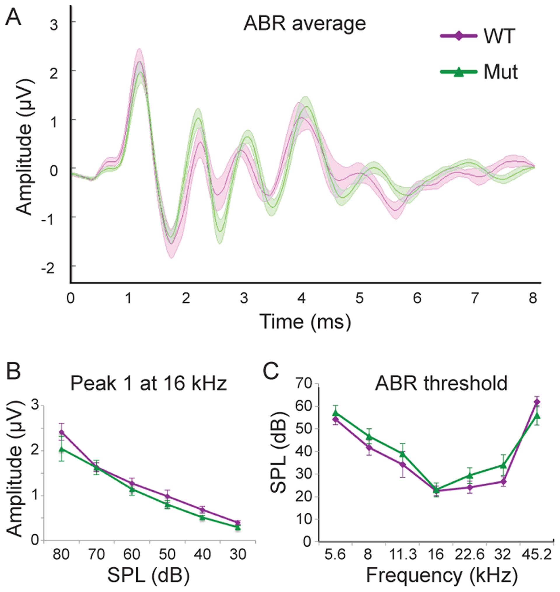 <i>Npr2</i> mutants show normal auditory responses.
