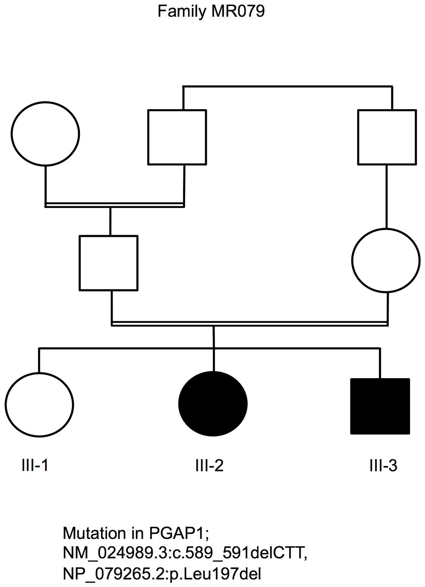 Pedigree of family MR079 and a PGAP1 mutation.