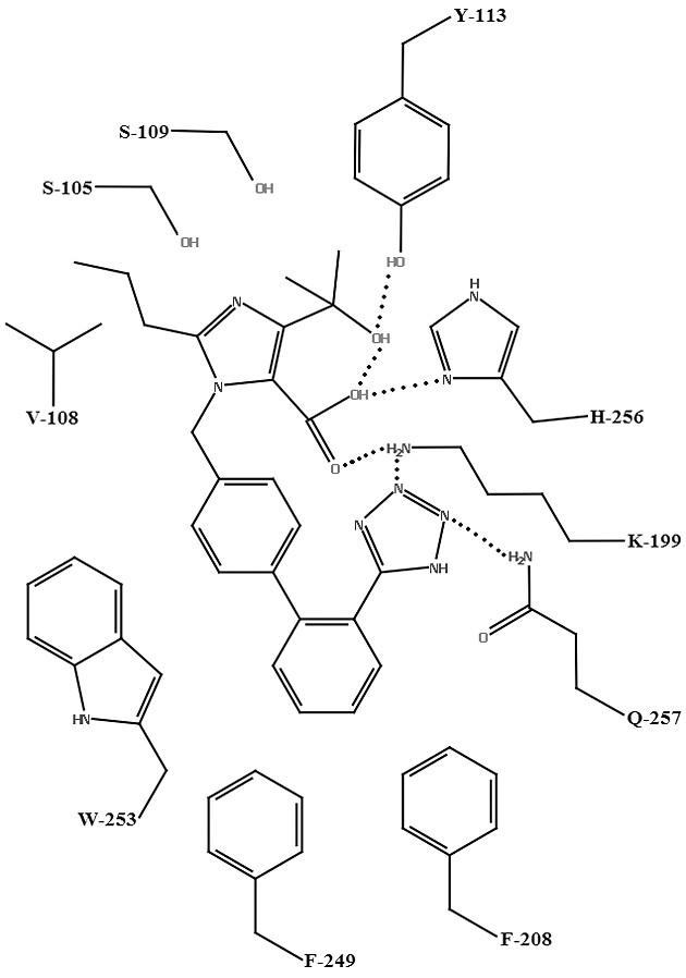 Schéma väzby olmesartanu s aktívnym miestom AT<sub>1</sub> receptora