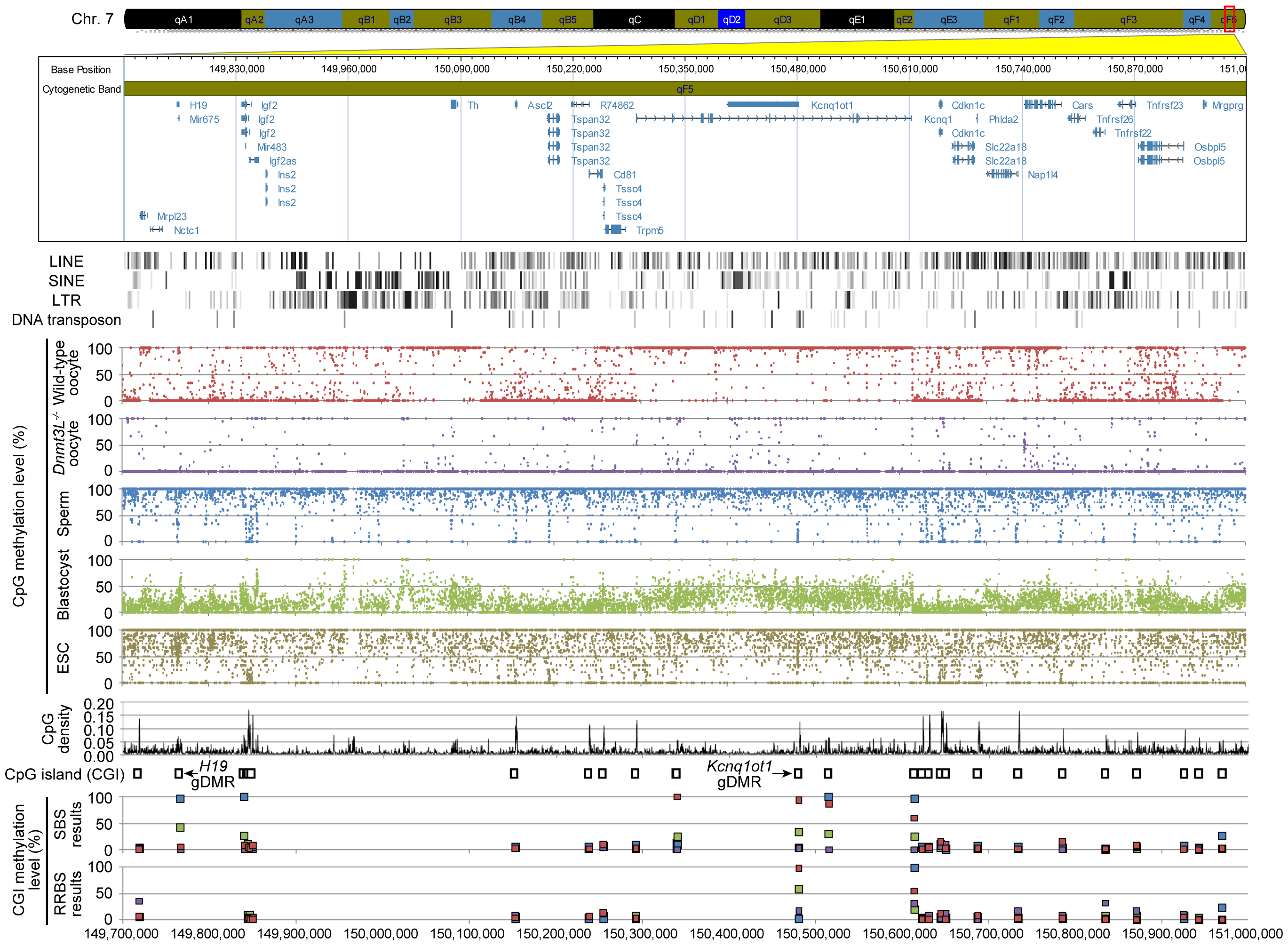 High-resolution DNA methylome map of mouse distal chromosome 7 imprinting cluster.