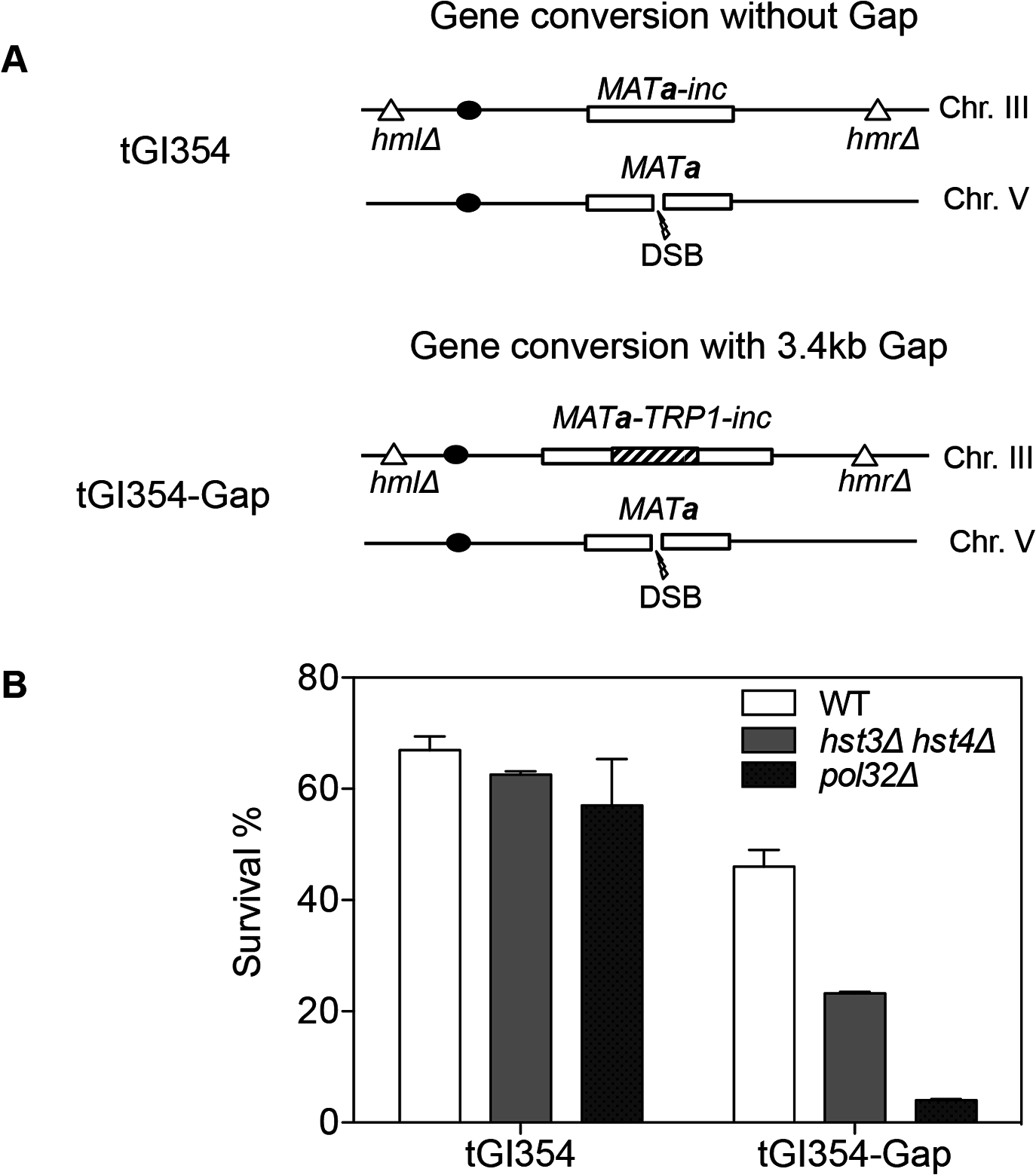<i>hst3</i>Δ <i>hst4</i>Δ and <i>pol32</i>Δ mutants are defective in DNA synthesis during gene conversion with a 3.4-kb gap.