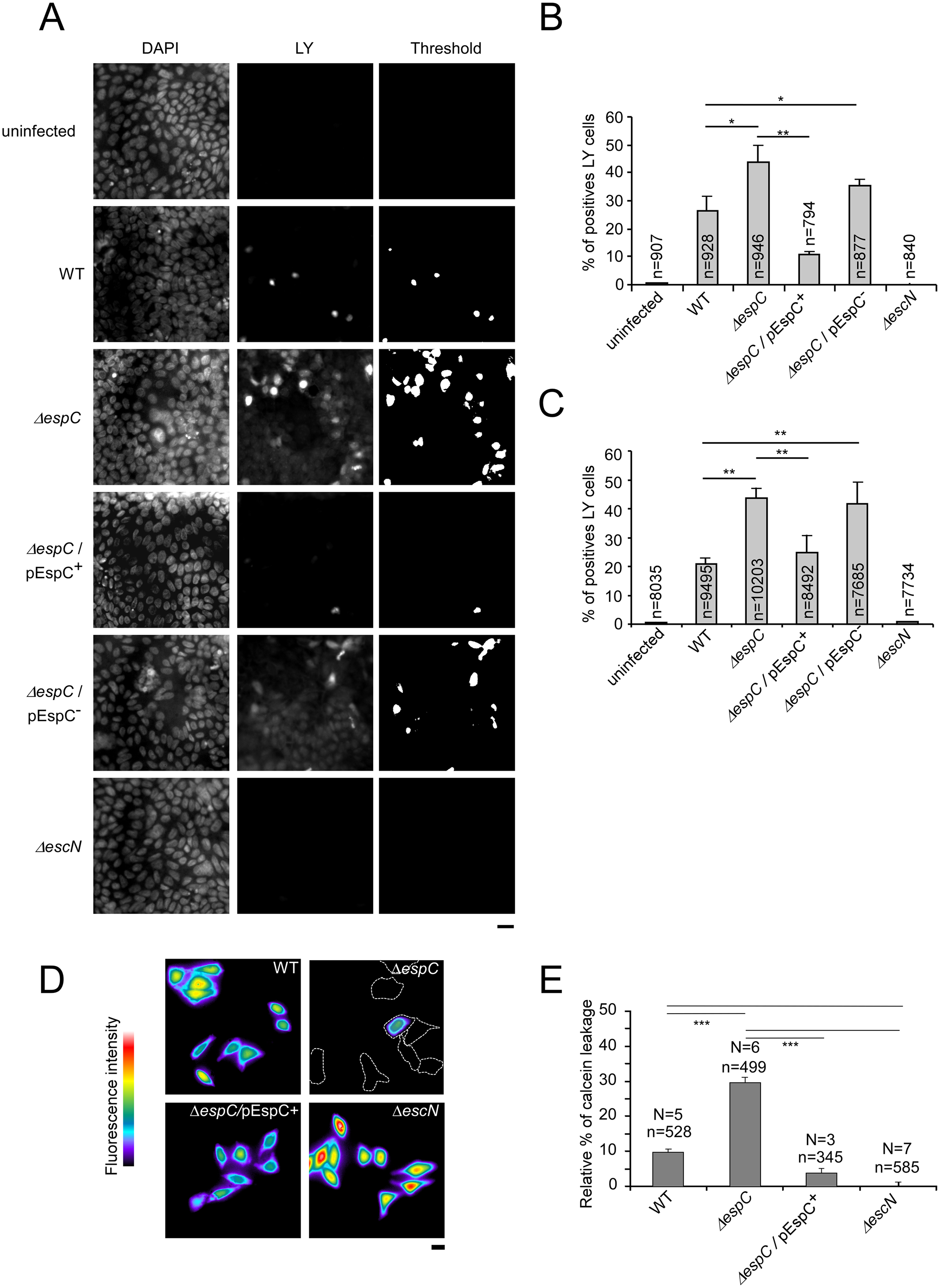 EspC controls pore formation mediated by the T3SS during cell infection.