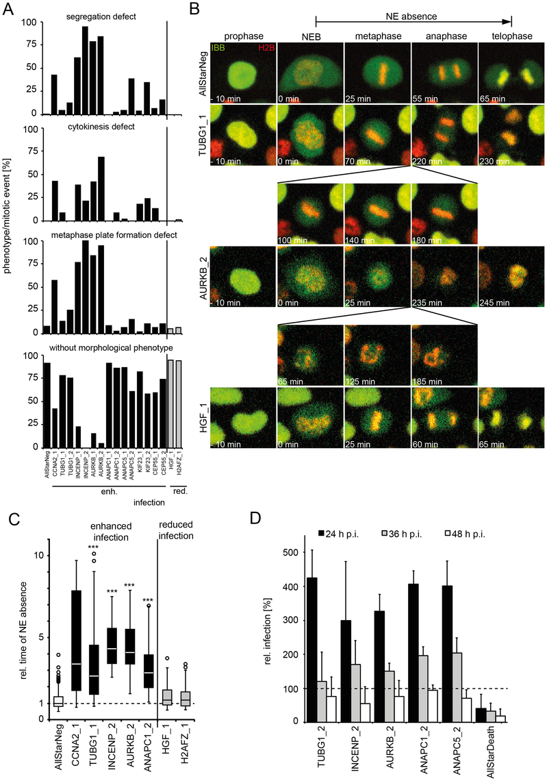 Mitotic regulators that enhance HPV16 infection exhibit prolonged mitoses upon RNAi.