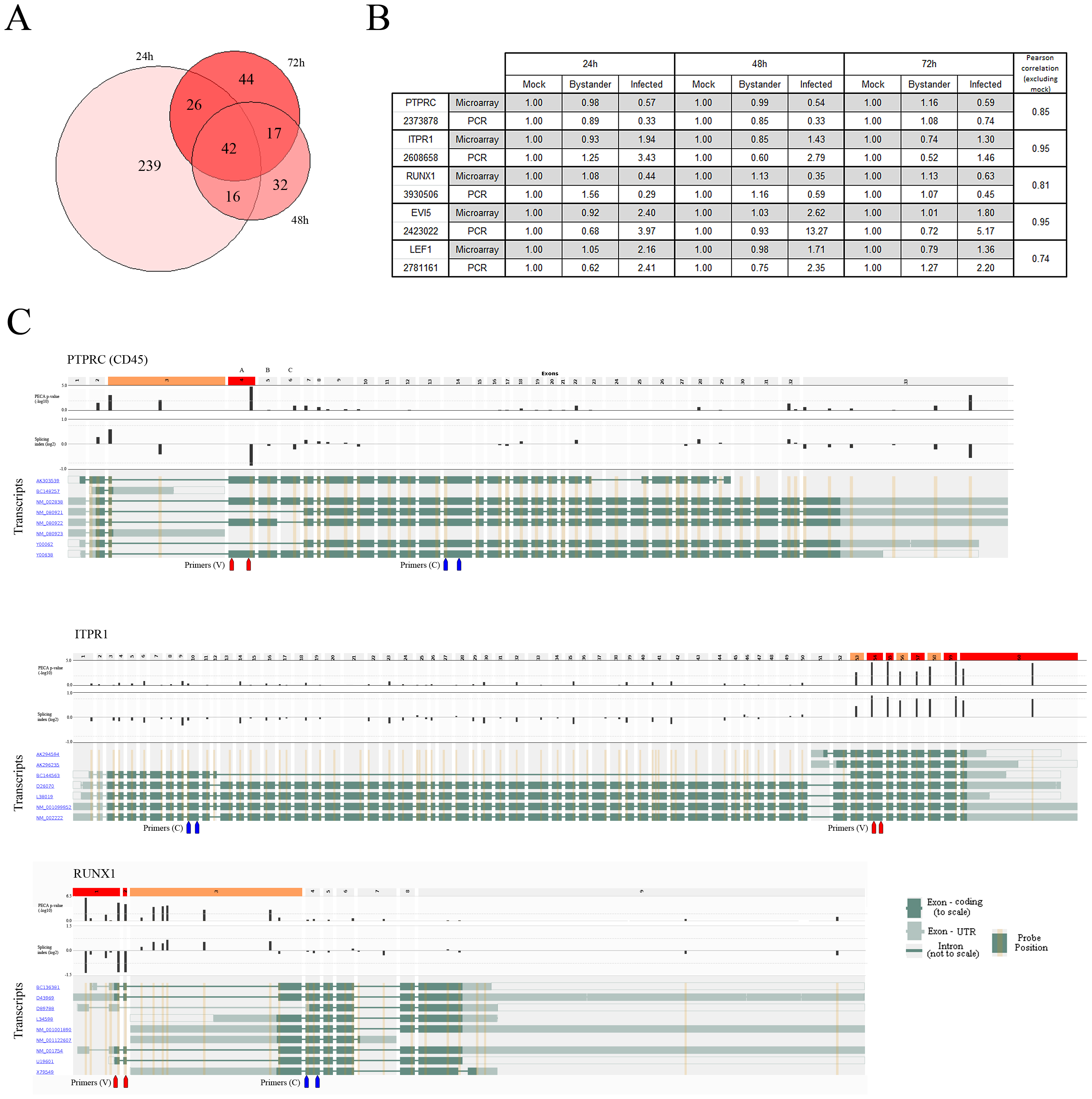 Alternative splicing events are found in HIV-1-infected cells.