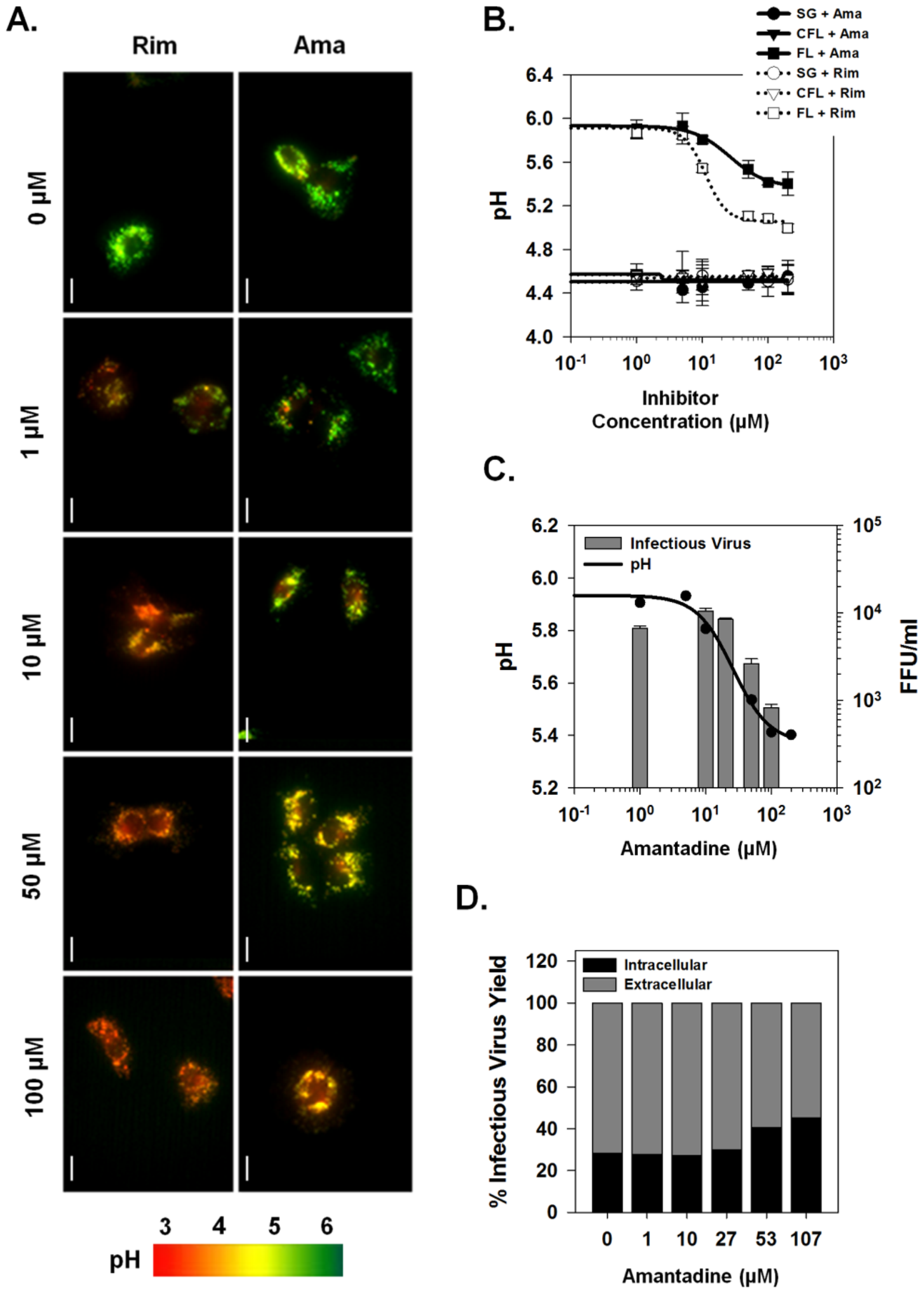 Effects of viroporin inhibitors on intracellular vesicular pH and infectious virus production.