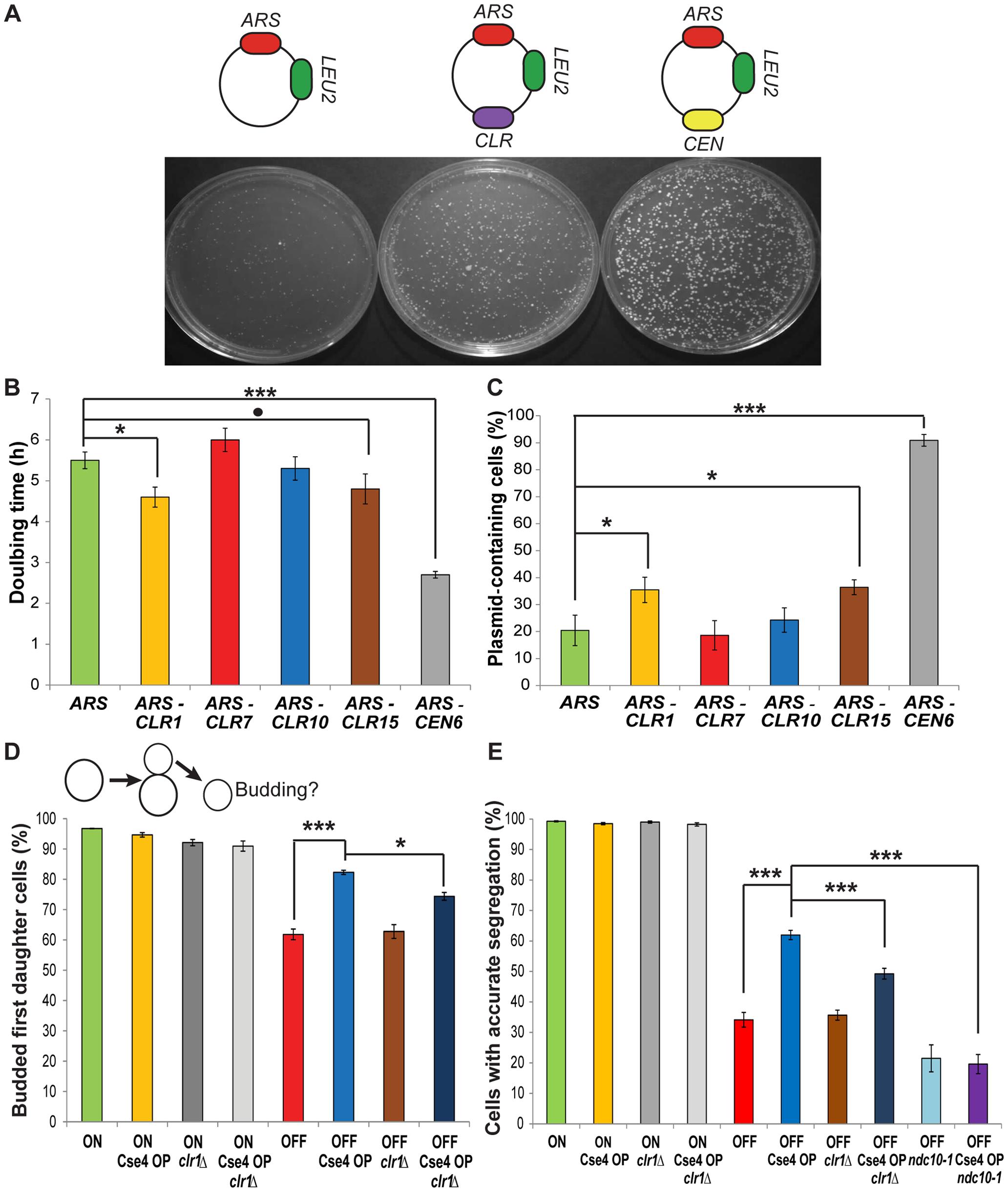 <i>CLR</i>s confer centromere function on plasmids and chromosomes.