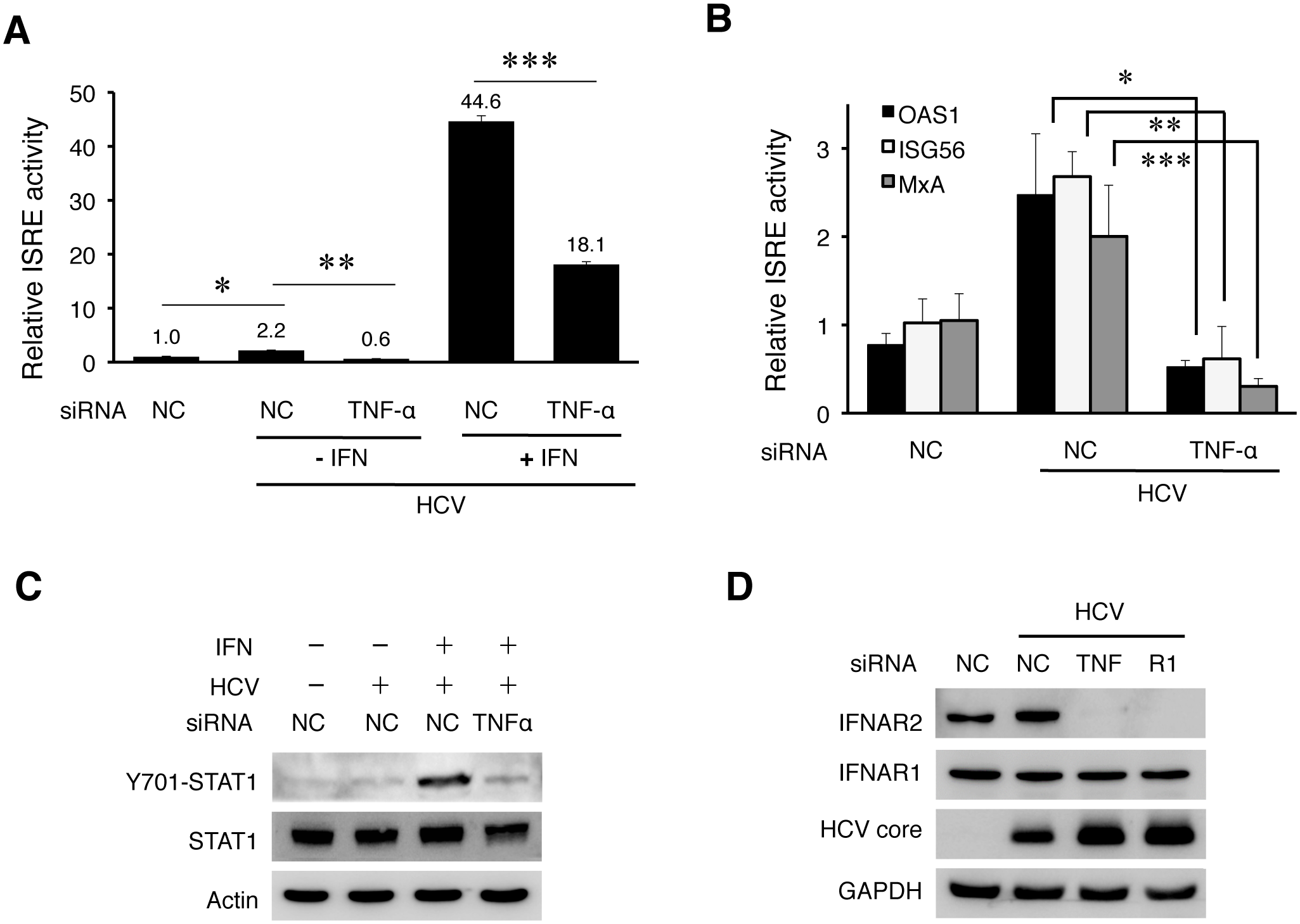 TNF-α induced by HCV is required to support IFN signaling.
