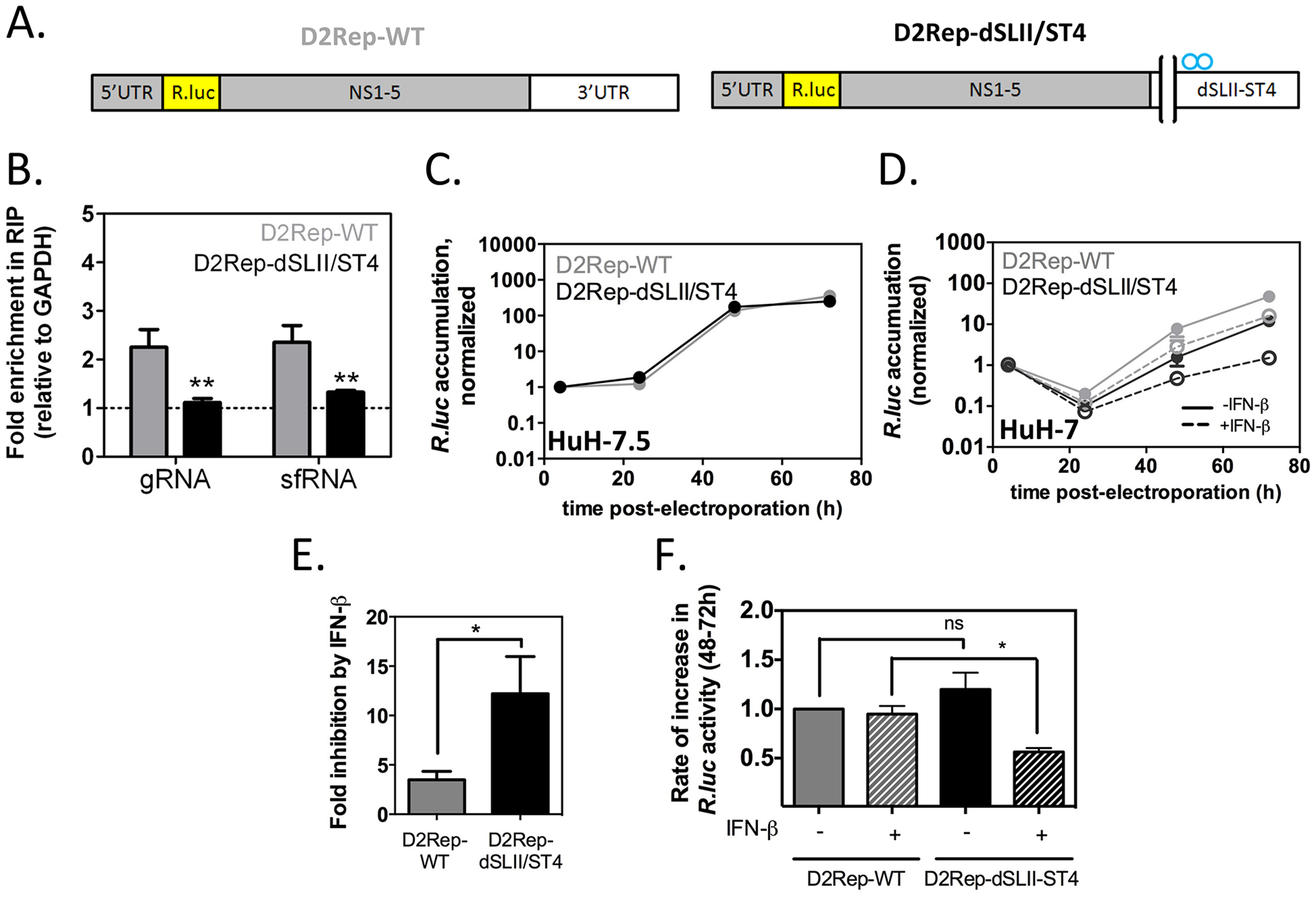 Binding to G3BP1, G3BP2 and CAPRIN1 protects DENV-2 replicons from the antiviral effects of IFN-β.