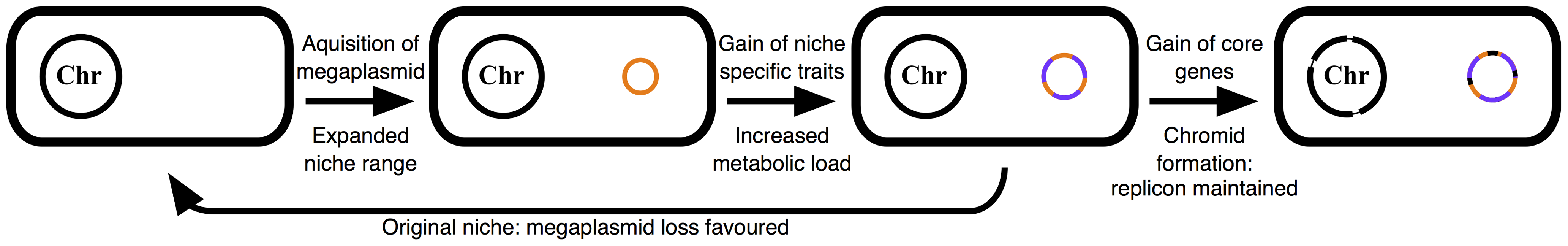 Schematic illustrating the described model of multipartite genome evolution and chromid formation.