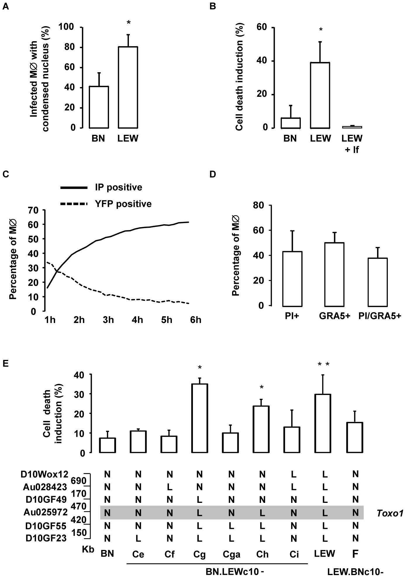 <i>T. gondii</i> killing is associated with the rapid death of infected <i>Toxo1</i>-LEW macrophages.