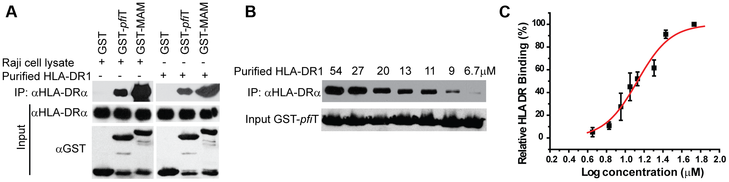 <i>Pfi</i>T directly interacts with the class II MHC HLA-DR.