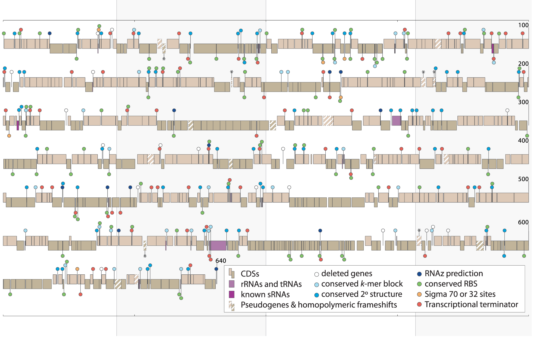 IGS features in the <i>Buchnera</i>-ApTokyo genome.