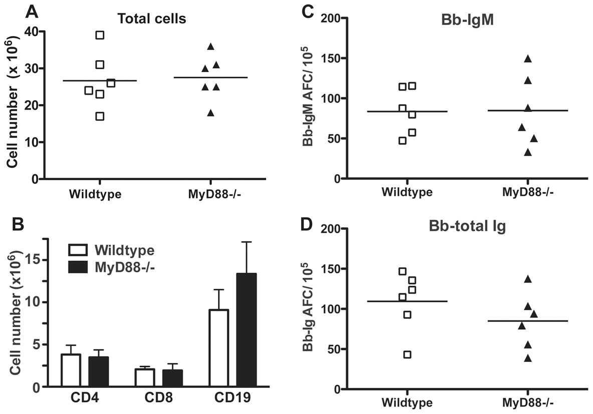 Lymphadenopathy and lymph node B cell activation are independent of MyD88-signaling.