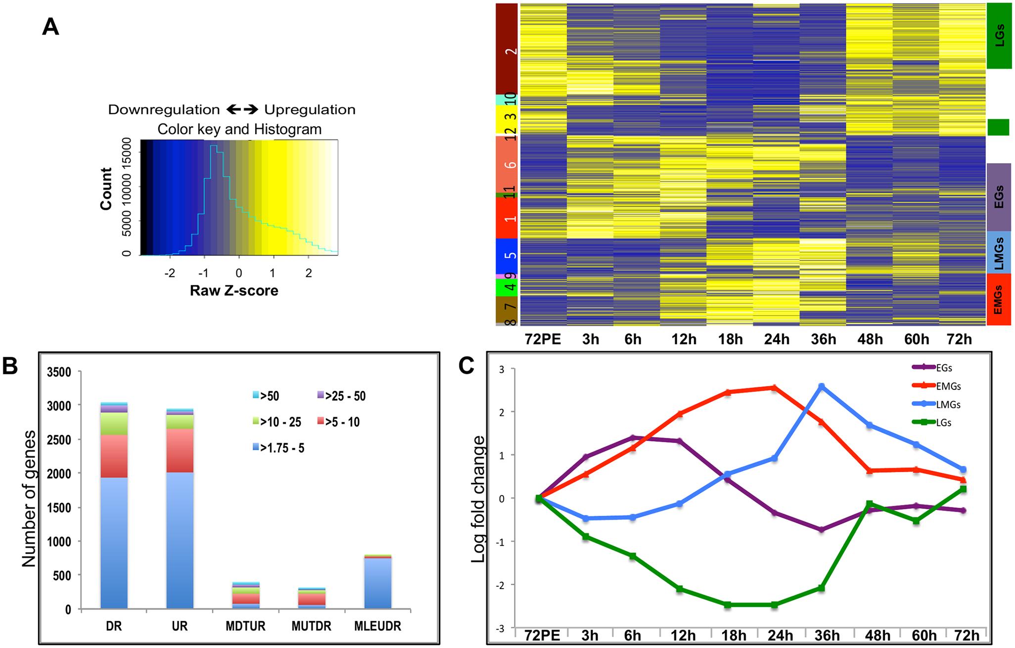 Expression dynamics of <i>A</i>. <i>aegypti</i> fat body genes post blood meal.