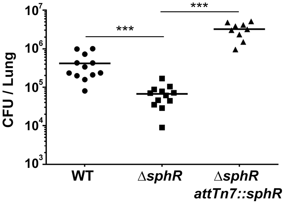 Deletion of <i>sphR</i> reduces <i>P. aeruginosa</i> survival in the mouse lung.