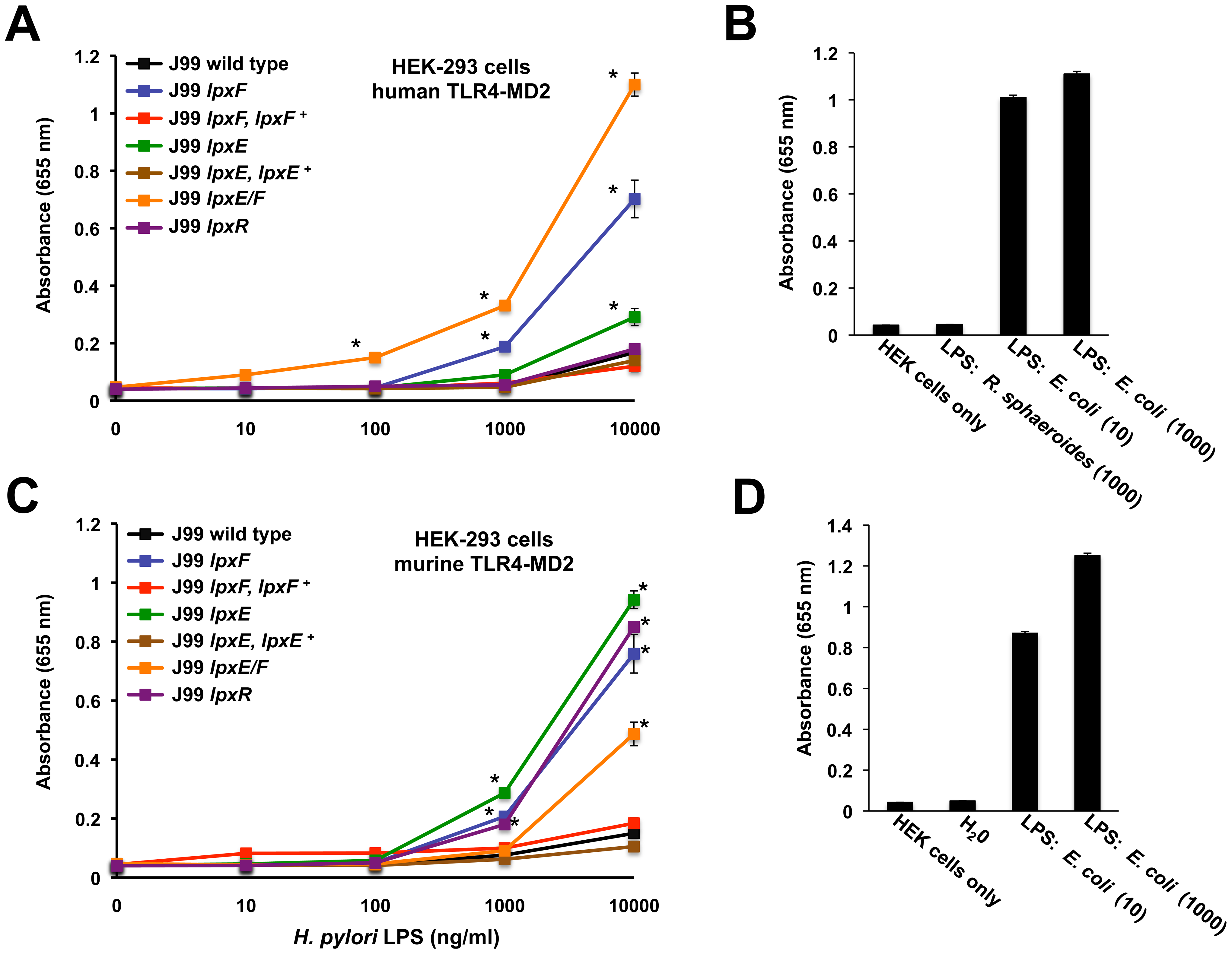Activation of human or murine TLR4-MD2 by <i>H. pylori</i> LPS.