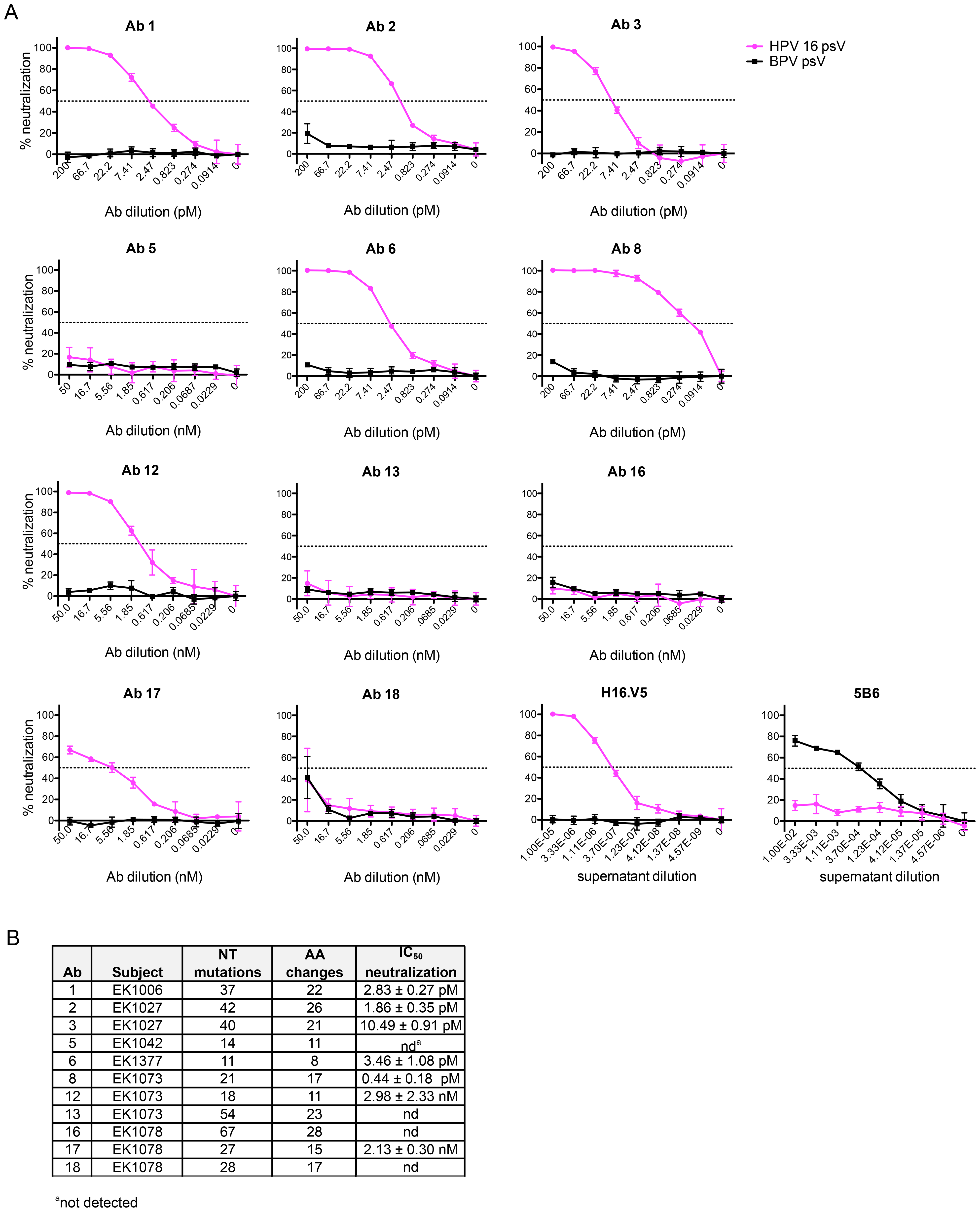 IgG cloned from HPV 16-specific Bmem are potently neutralizing.