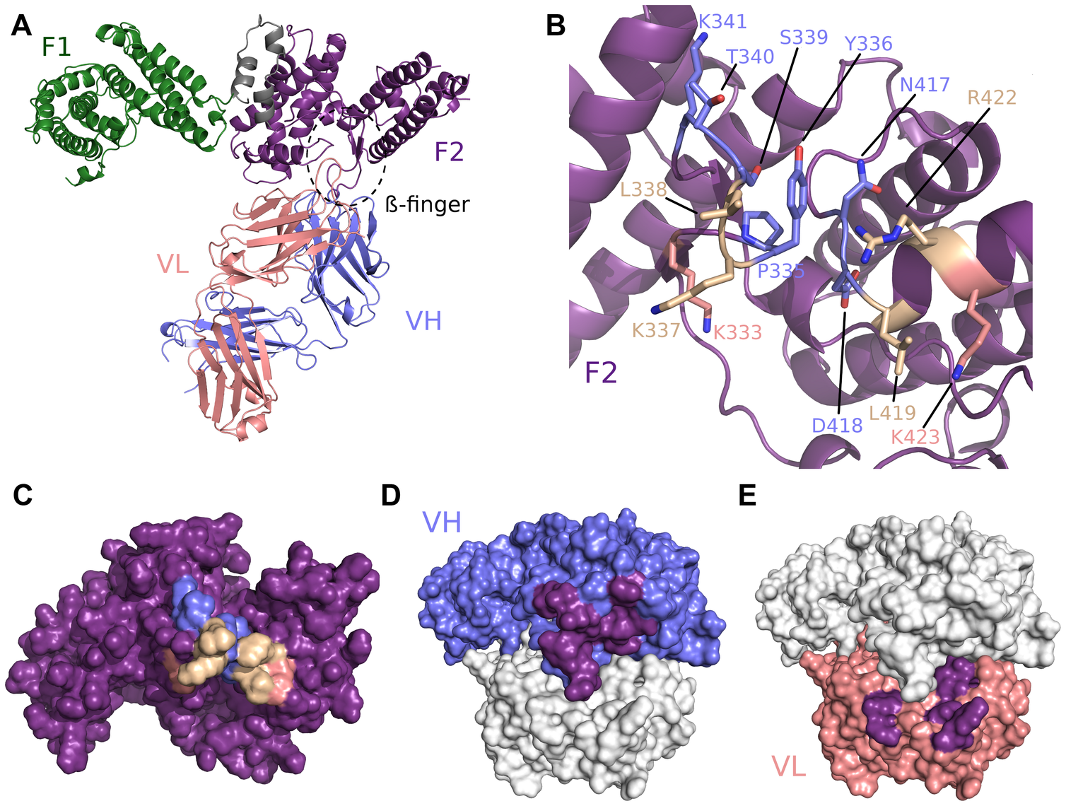 Crystal structure of RII/R217 Fab complex.