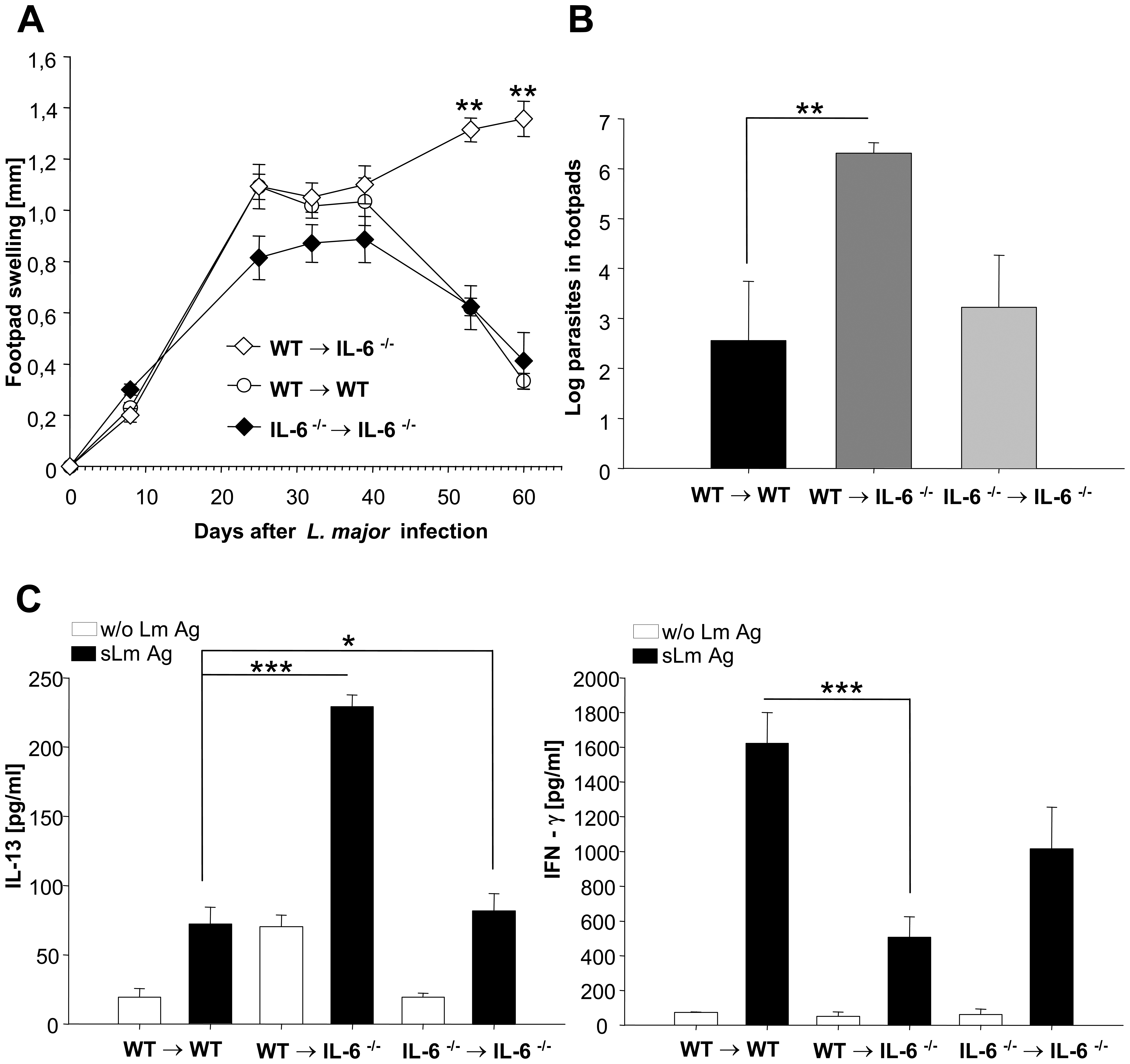 Experimental leishmaniasis in wt→IL-6 −/− chimeric mice.