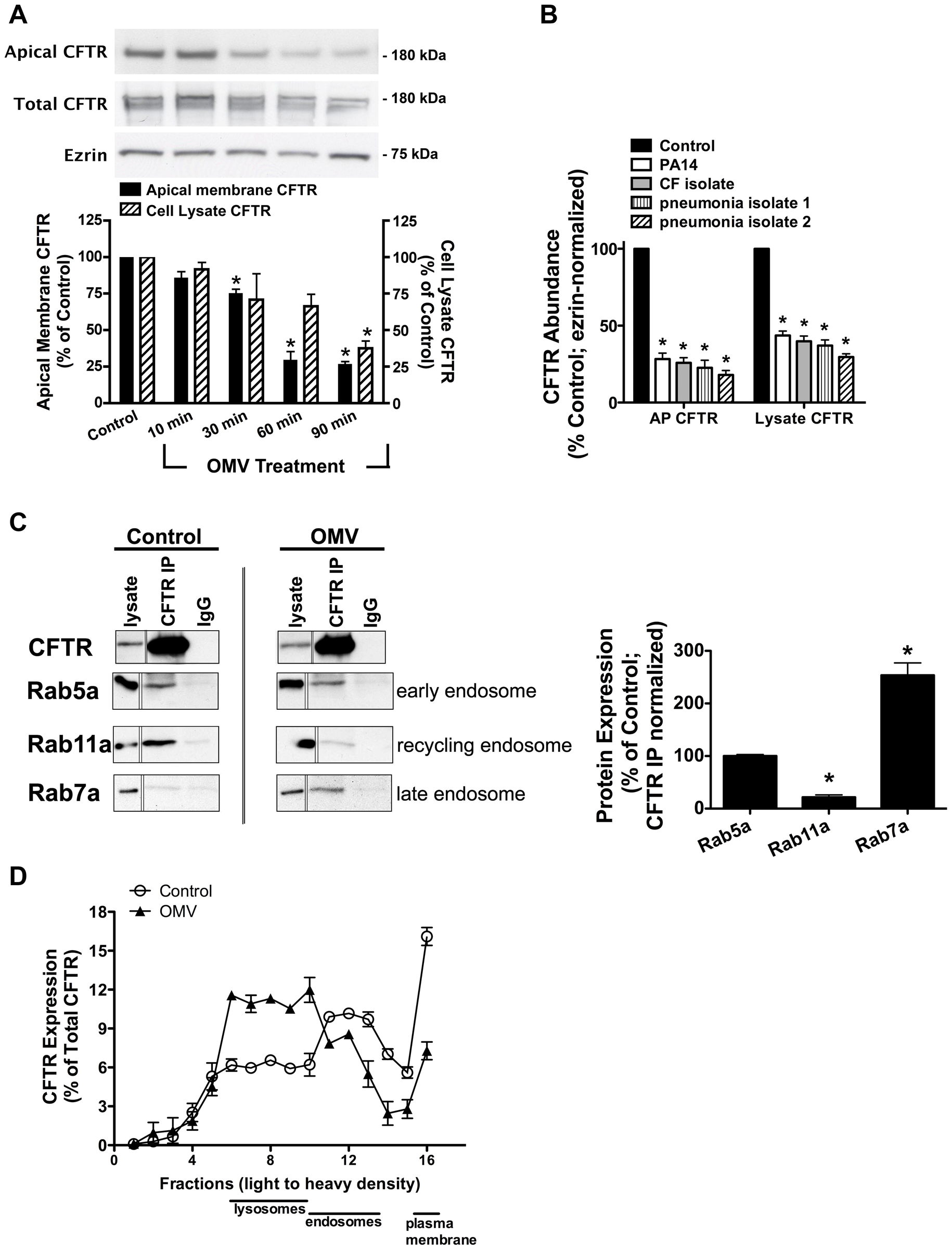 Cif redirects CFTR from recycling endosomes to the lysosomal, degradative pathway.