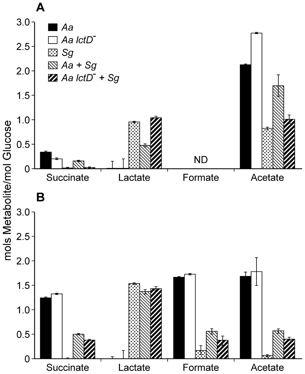 Metabolite production by <i>A. actinomycetemcomitans</i>, <i>A. actinomycetemcomitans lctD</i><sup>-</sup>, and <i>S. gordonii</i> in aerobic or anaerobic co-cultures.