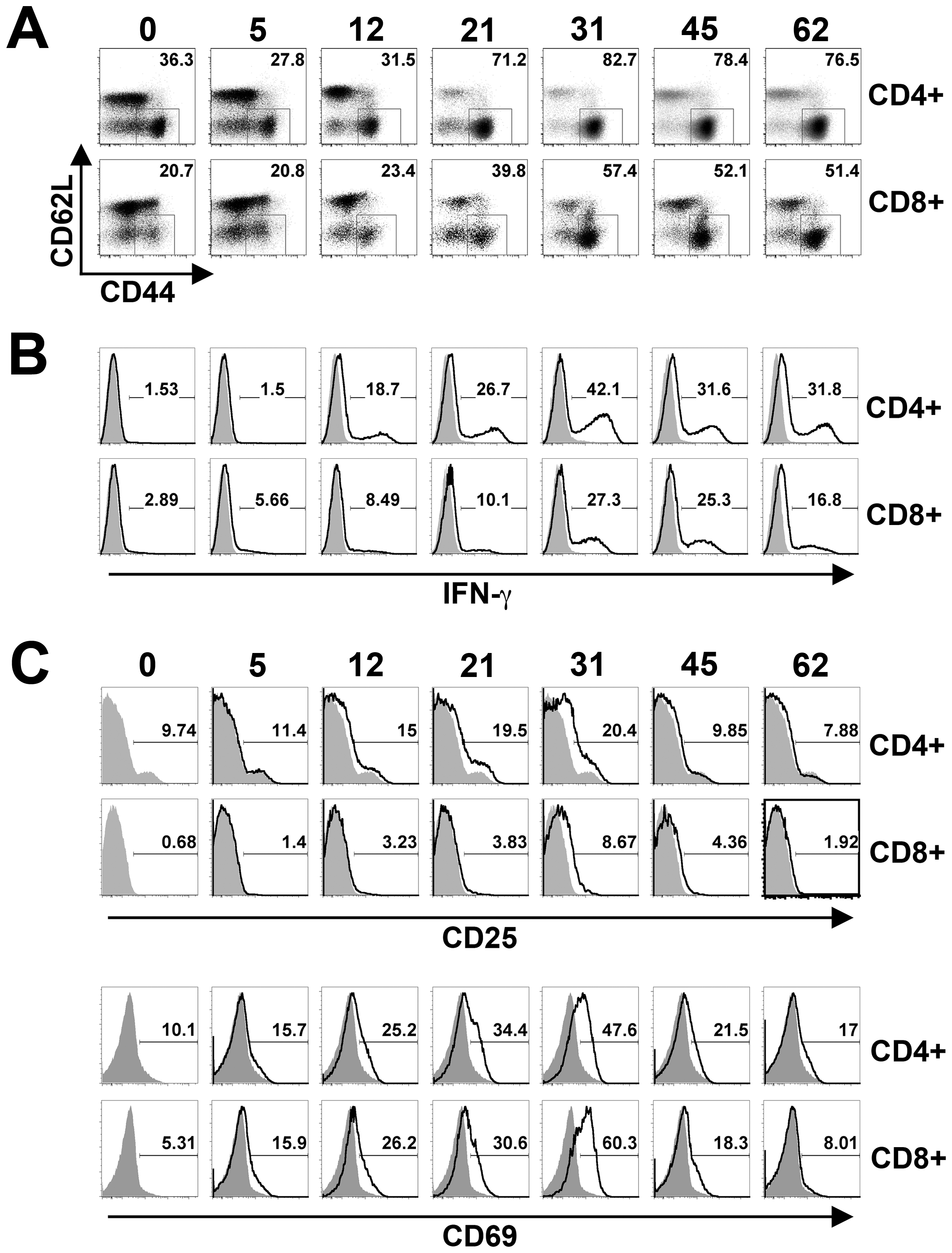 T cell activation kinetics during persistent <i>Salmonella</i> infection.