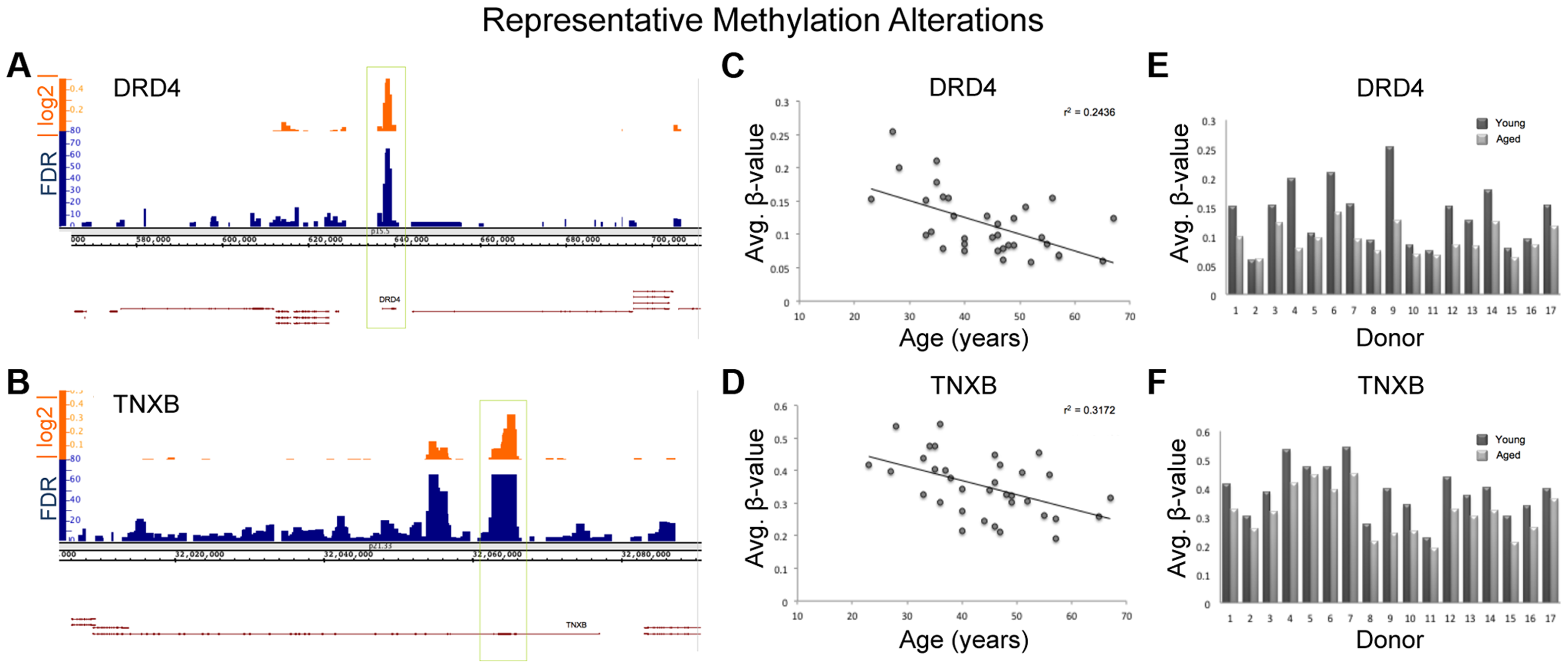 Various descriptive statistics are presented for both TNXB and DRD4; 2 regions of representative methylation alterations.